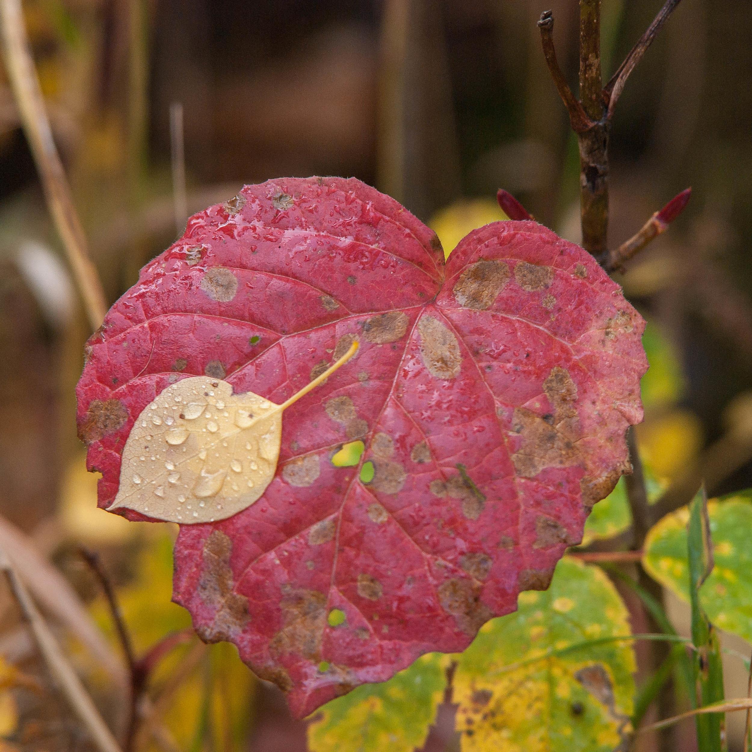 Autumn leaves by Steve Ricketts