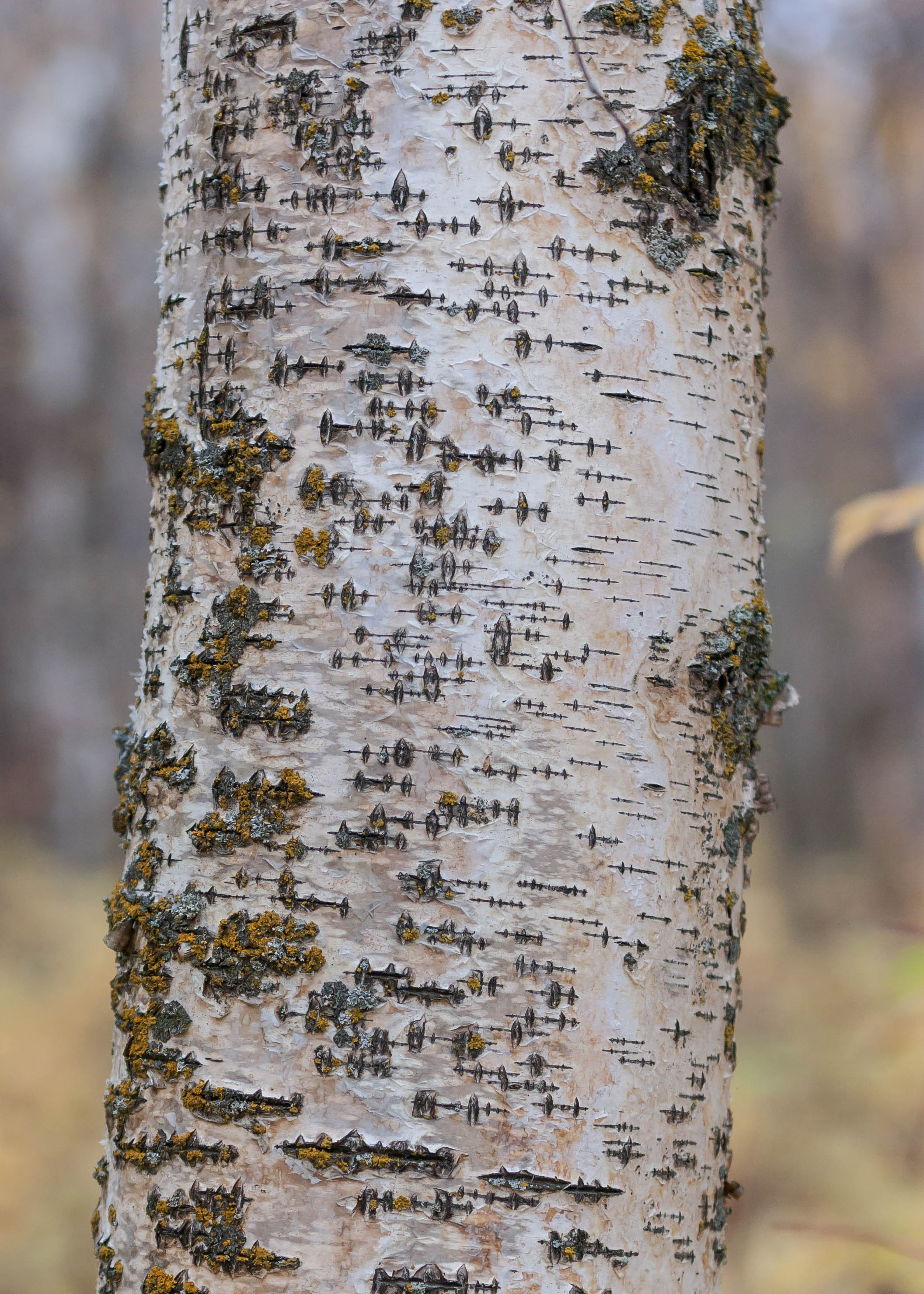 Tree seismograph by Steve Ricketts