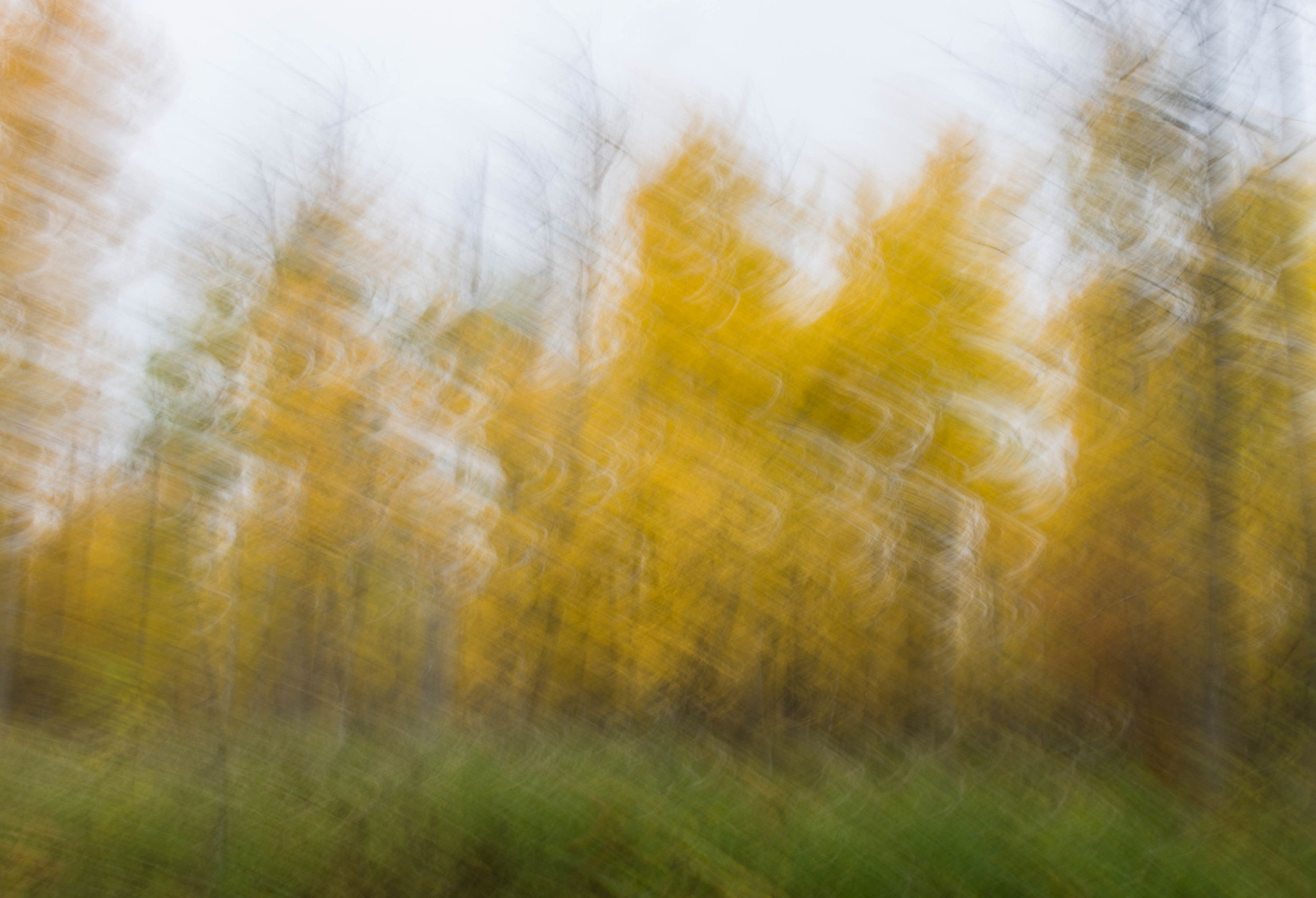 Trees (abstract) by Steve Ricketts