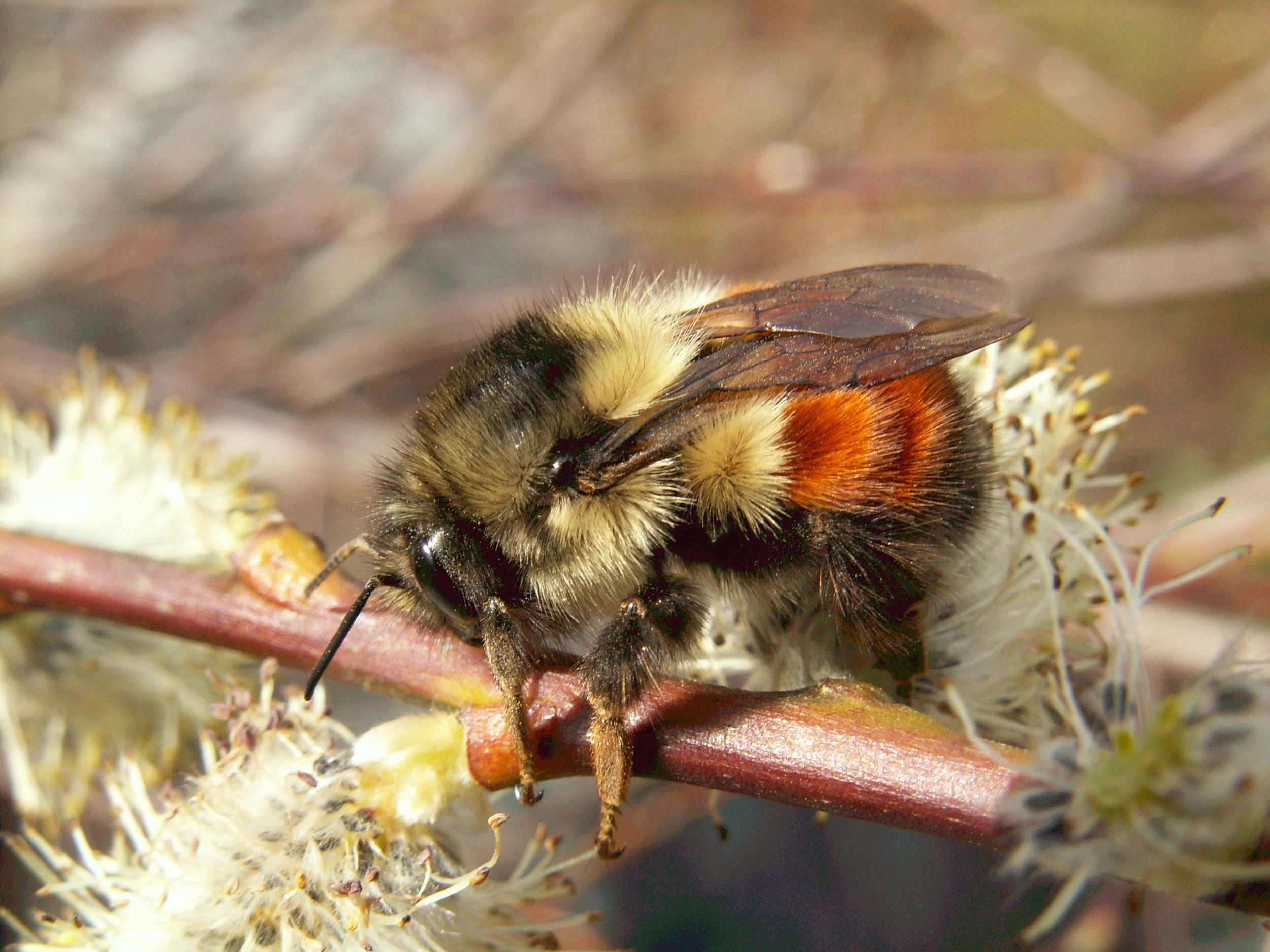 Bee - Doris May.jpg
