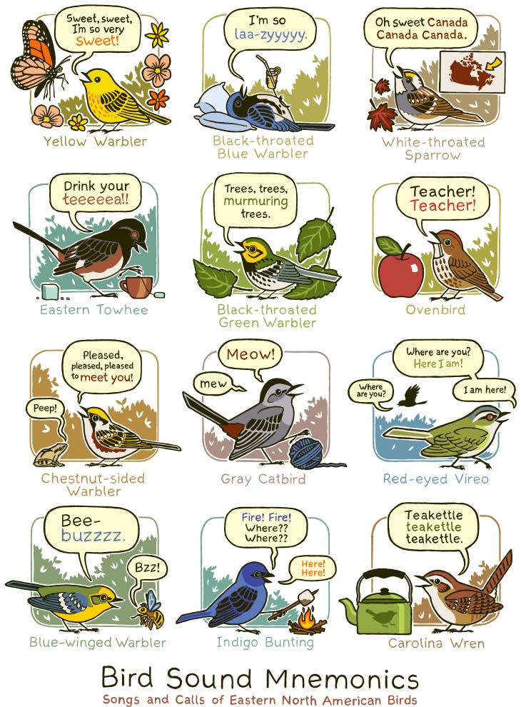 birdsounds.jpg