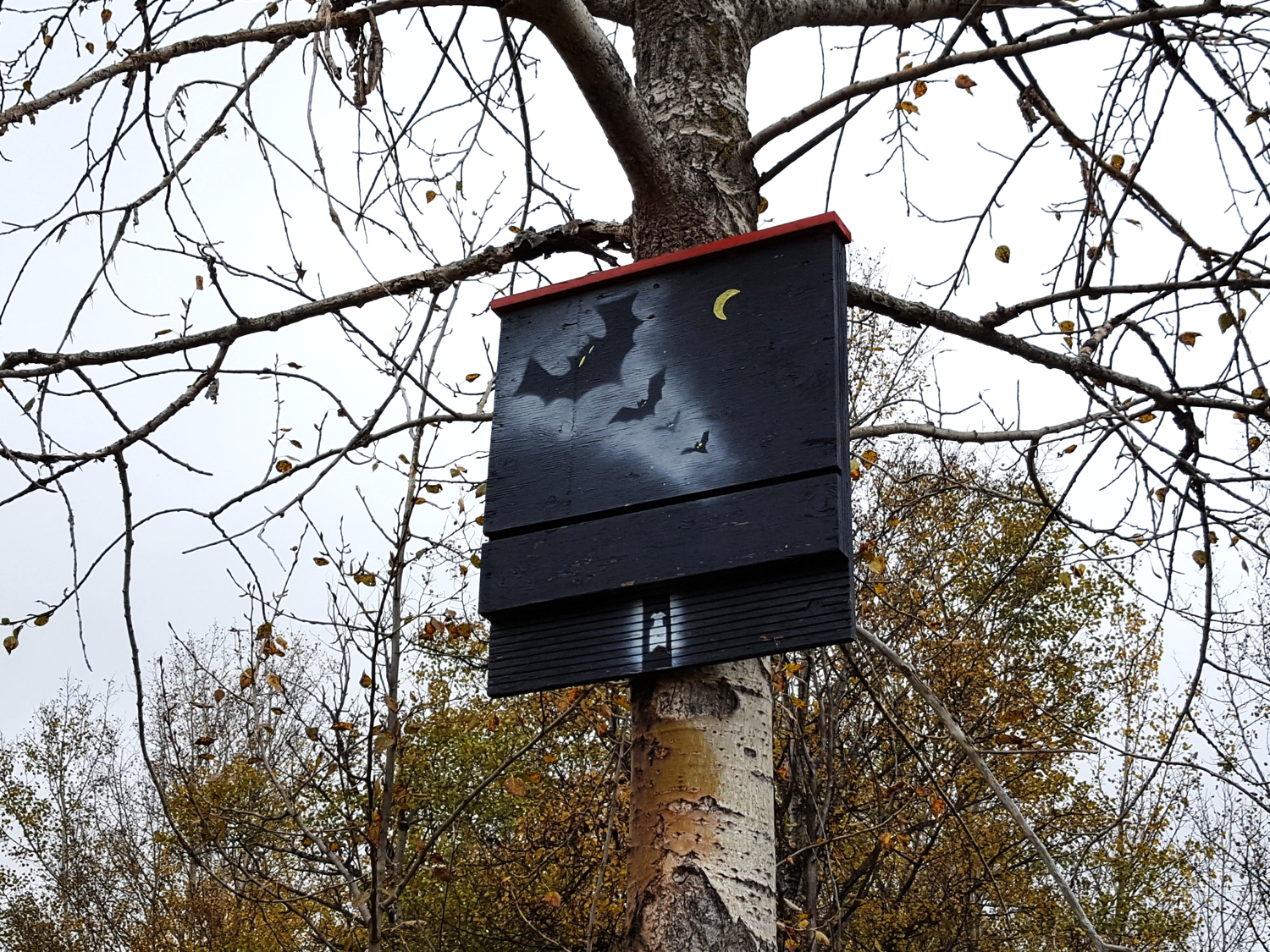Bat box at Pipestone Creek Conservation Lands built by Susan Kokas.