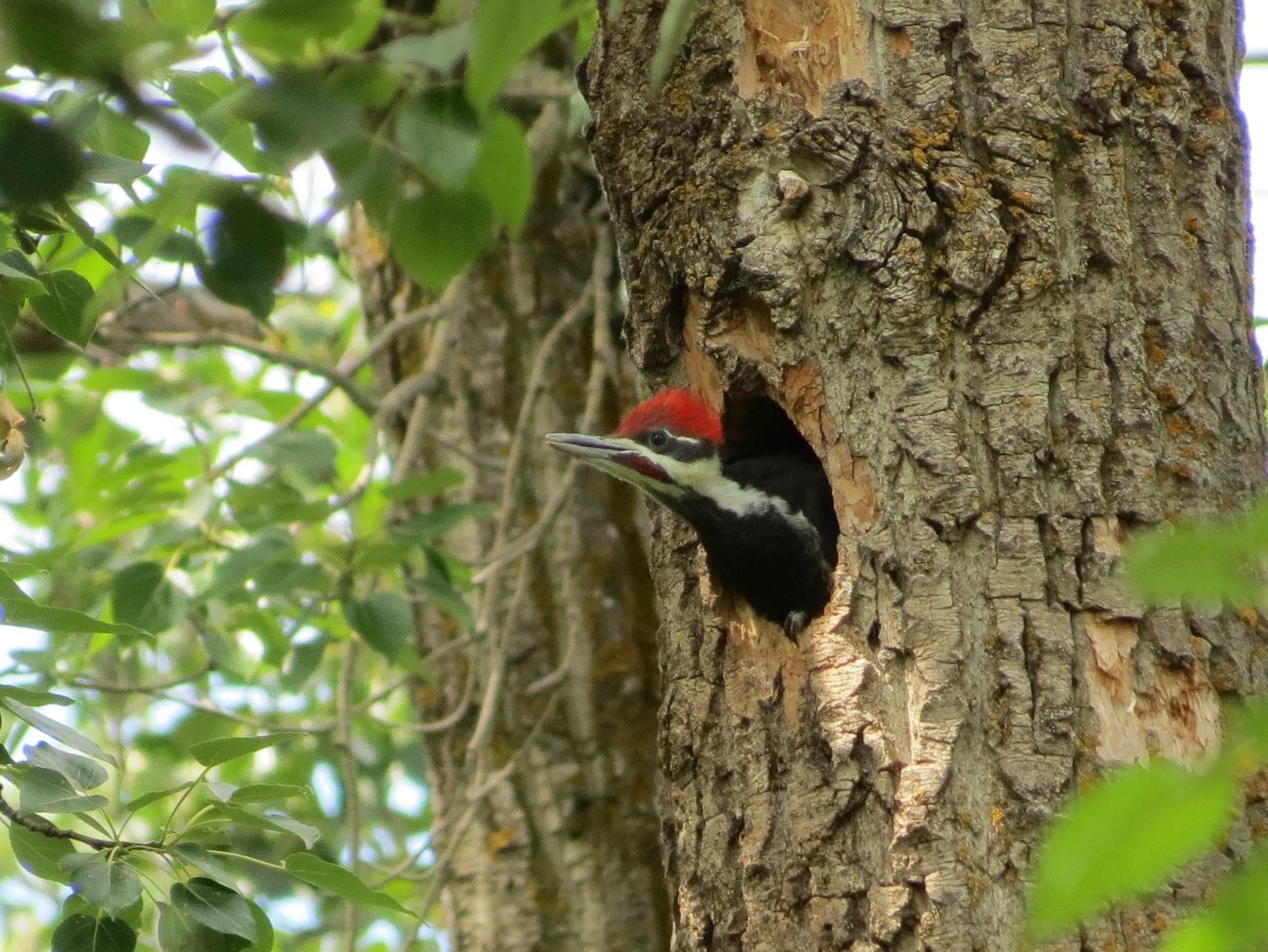 Nest at Boisvert's GreenWoods