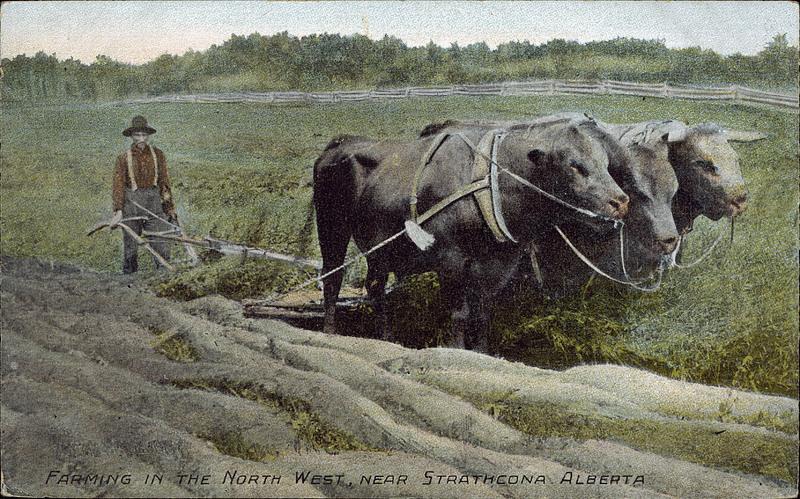 Farming in the North West, near Strathcona, Alberta