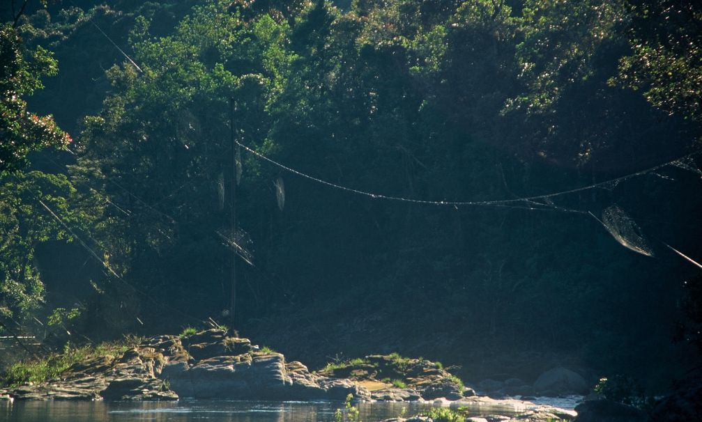 Several Darwin's bark spider  (Caerostris darwini ) webs spanning a river. Source.