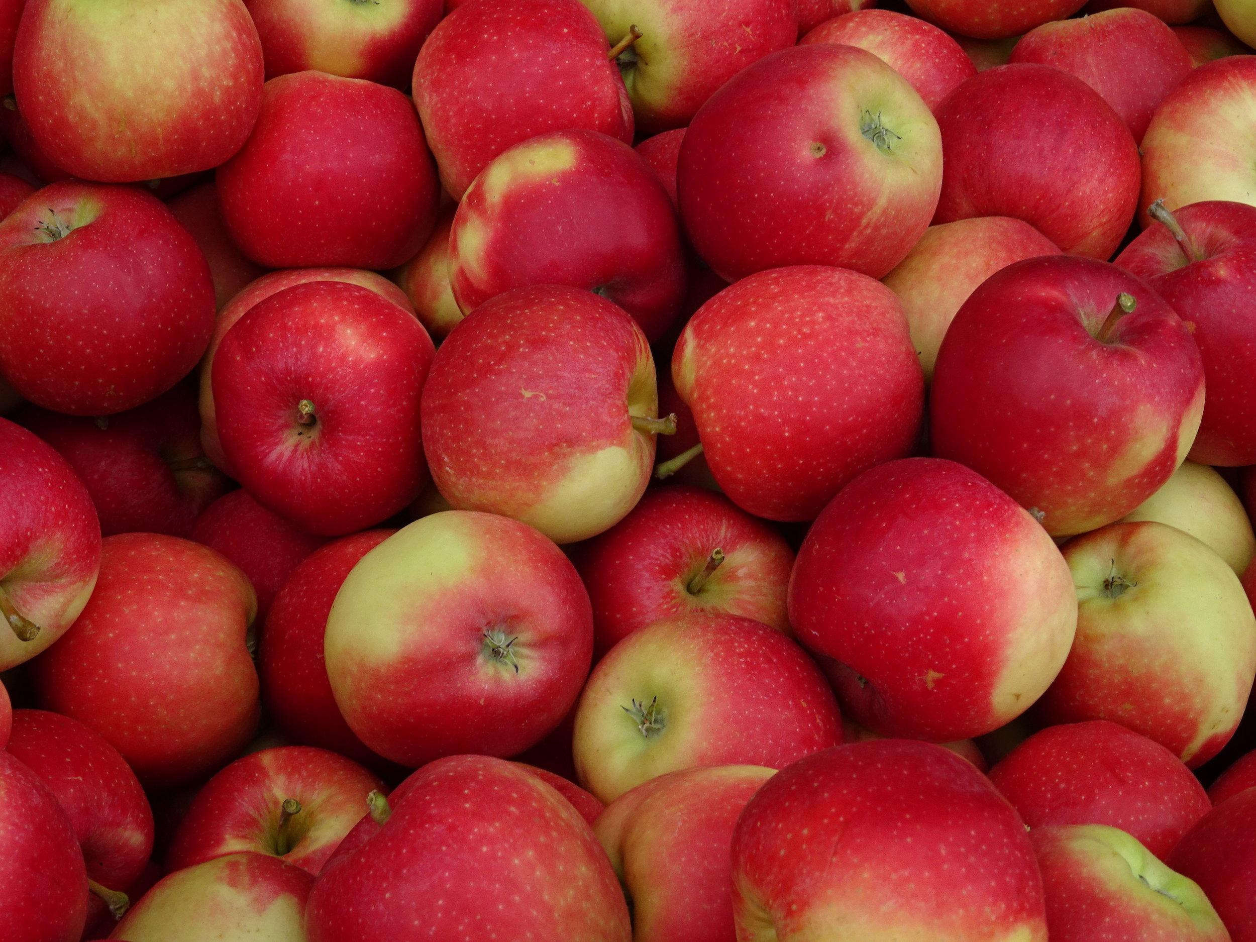 apples - public domain.jpg