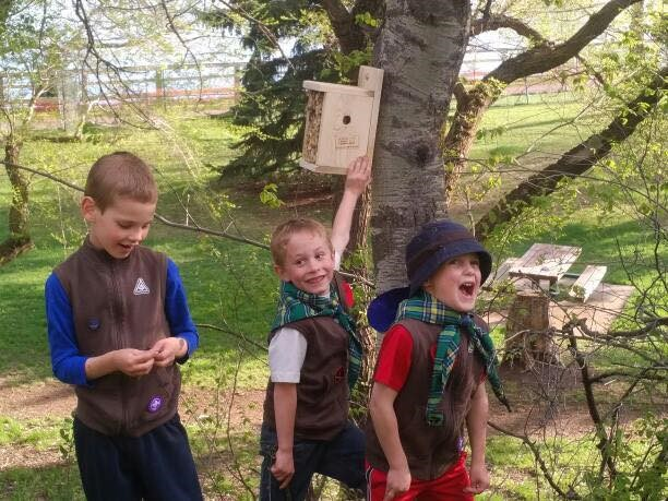 Beavers hung up 19 bee houses around Lacombe Lake Park – busy Beavers!