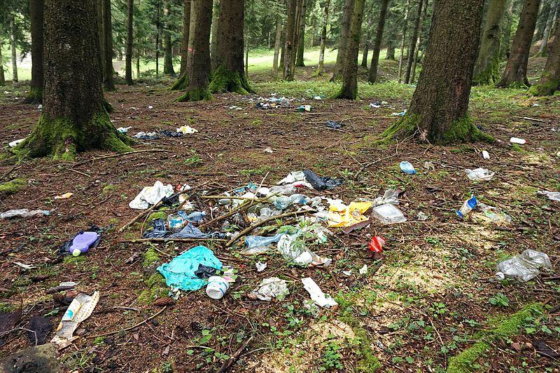 Trash_in_forest.jpg