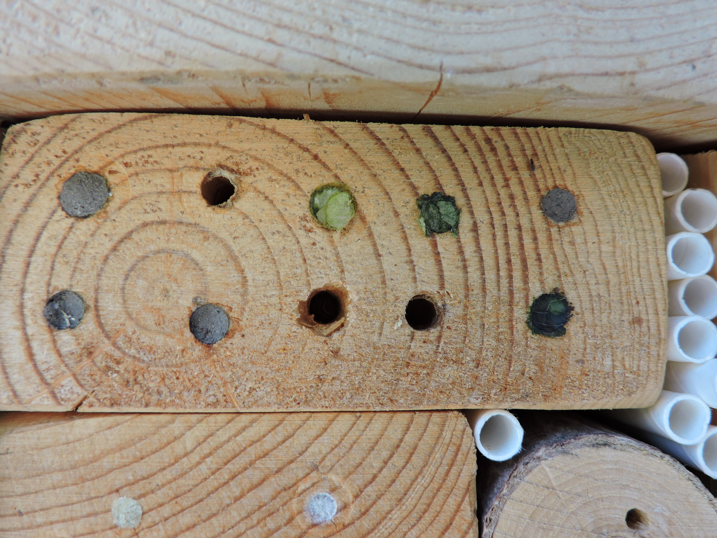 leaf cutter, mason bee, and masked bee nests