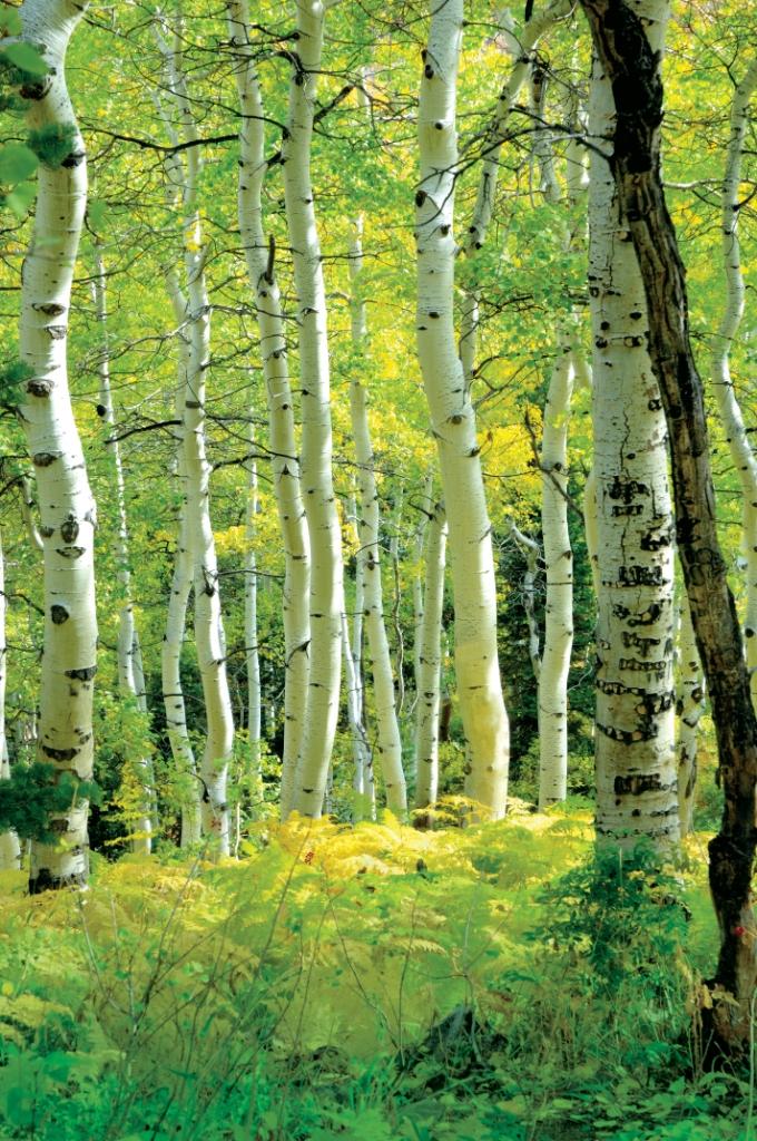 Friendly Forest.jpg