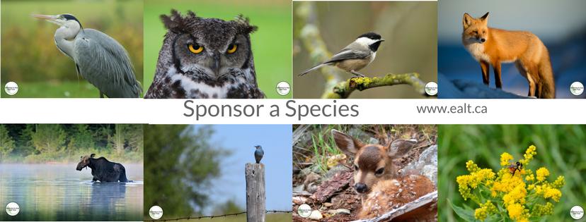 Sponsor a Species ealt.ca (1).png