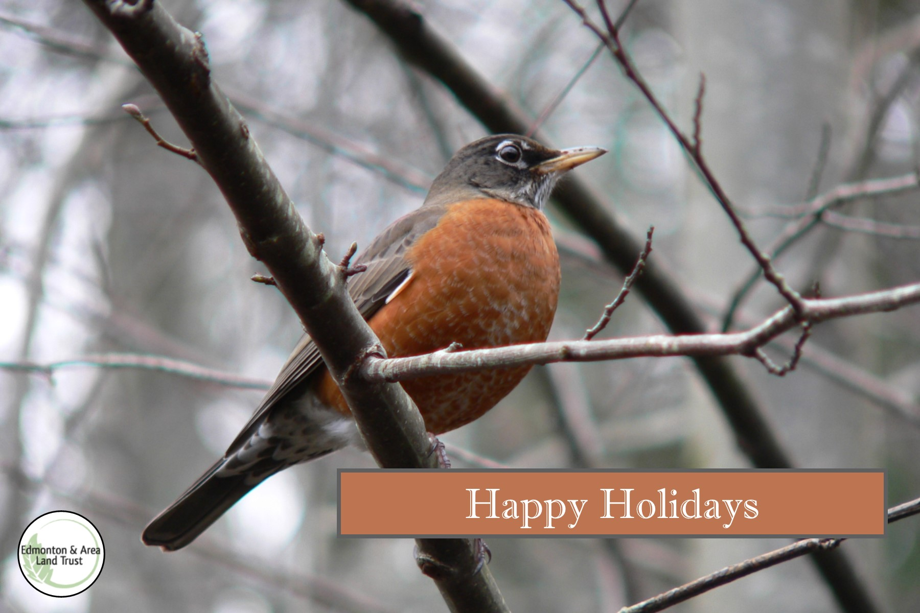 Happy Holidays Robin.jpg