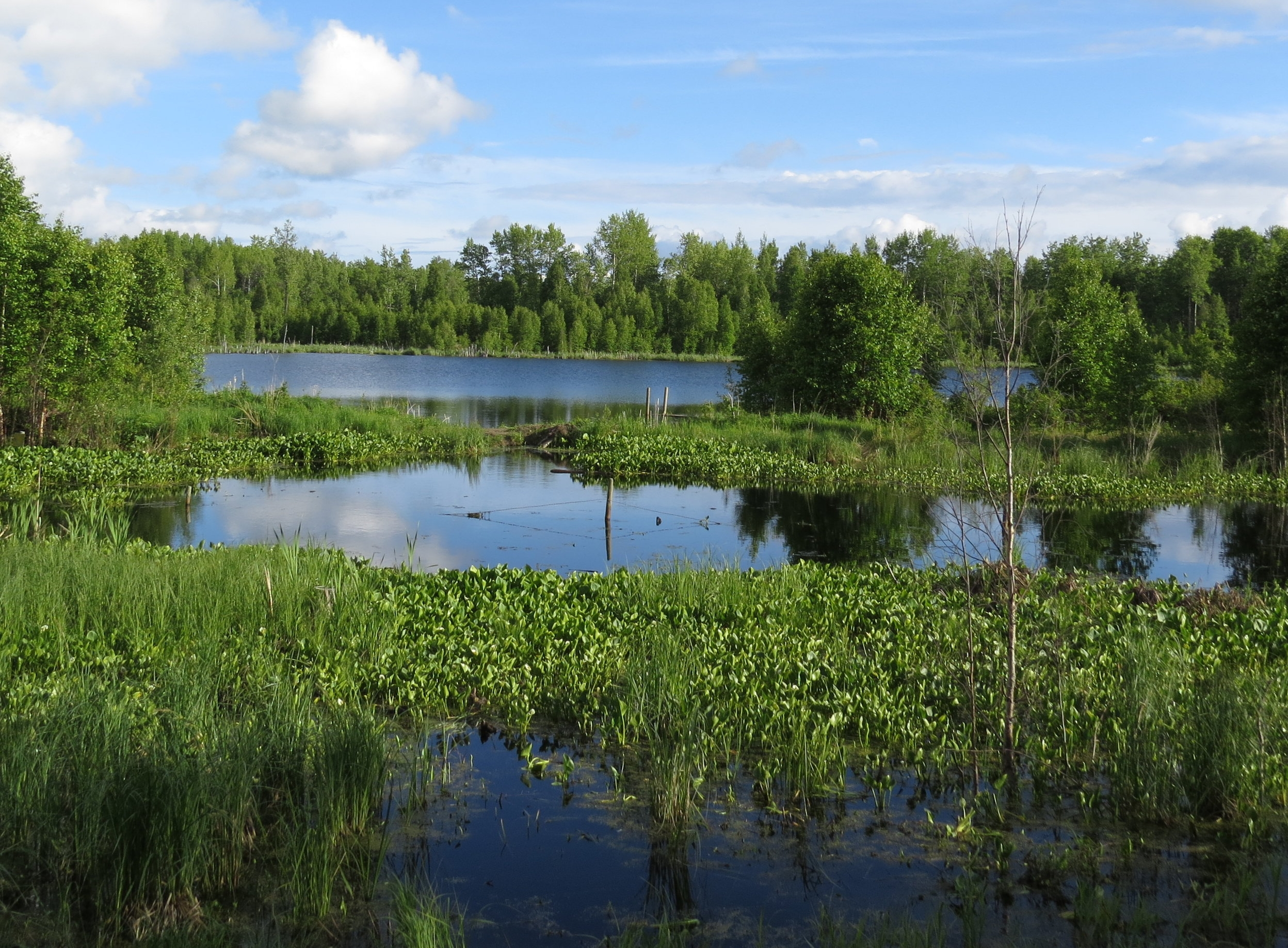 LU CARBYN NATURE SANCTUARY    Boreal forest and wetlands providing habitat for birds.   EXPLORE THIS LAND