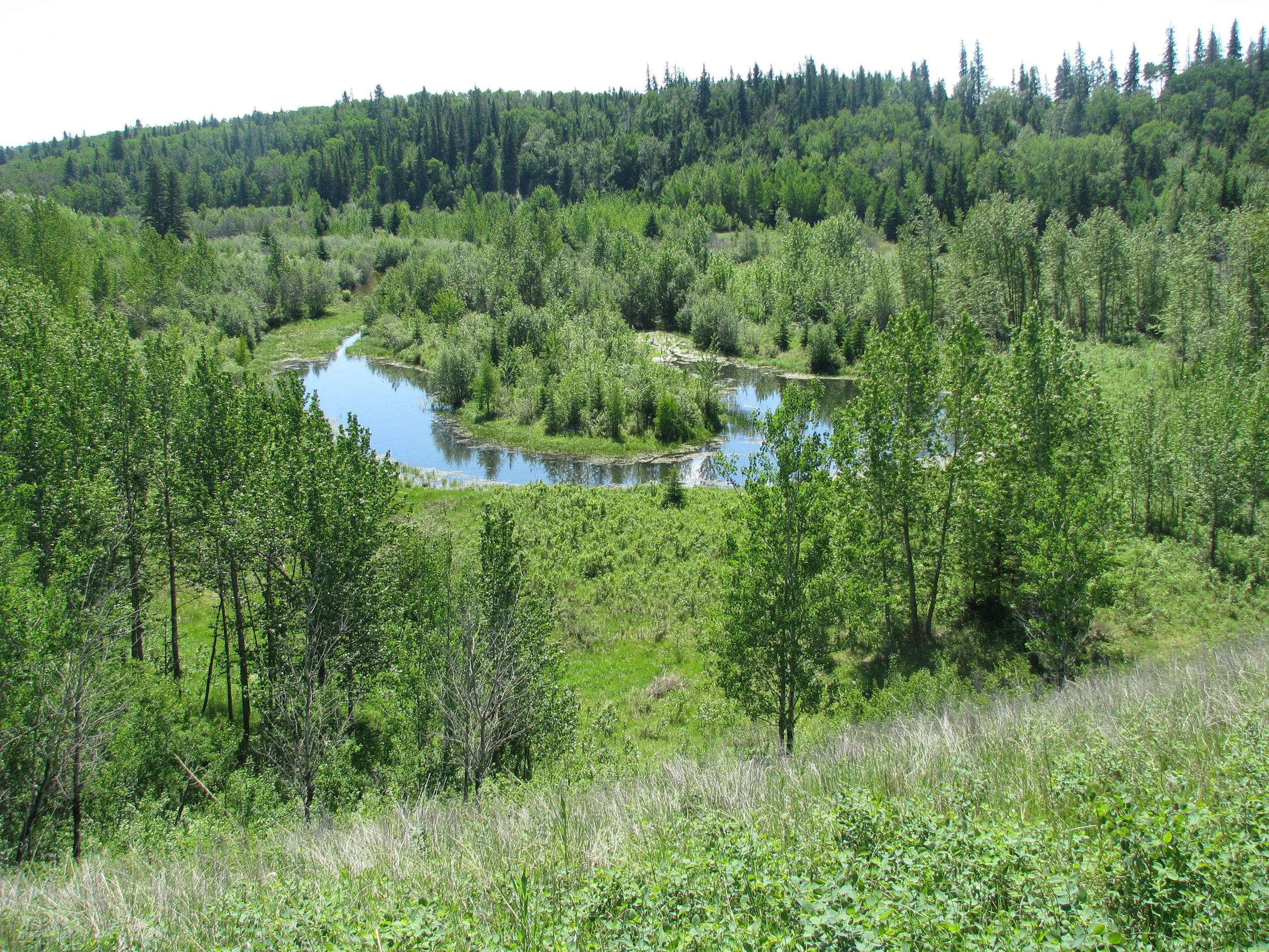 Oxbow Lake next to Pipestone Creek