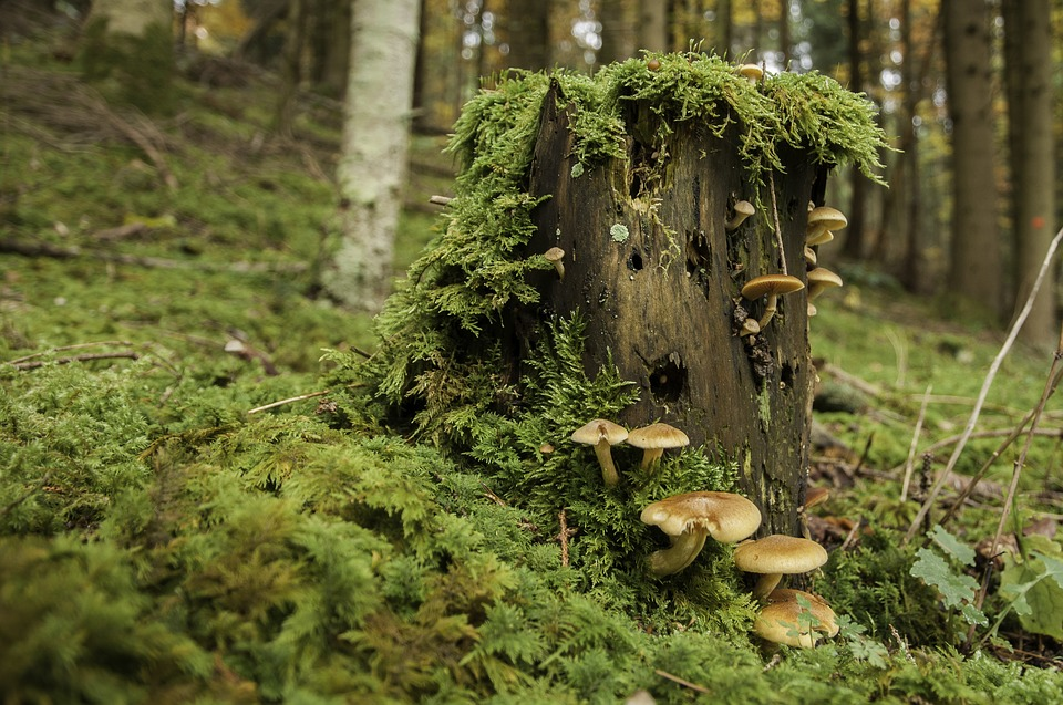 Fungi on snag.jpg