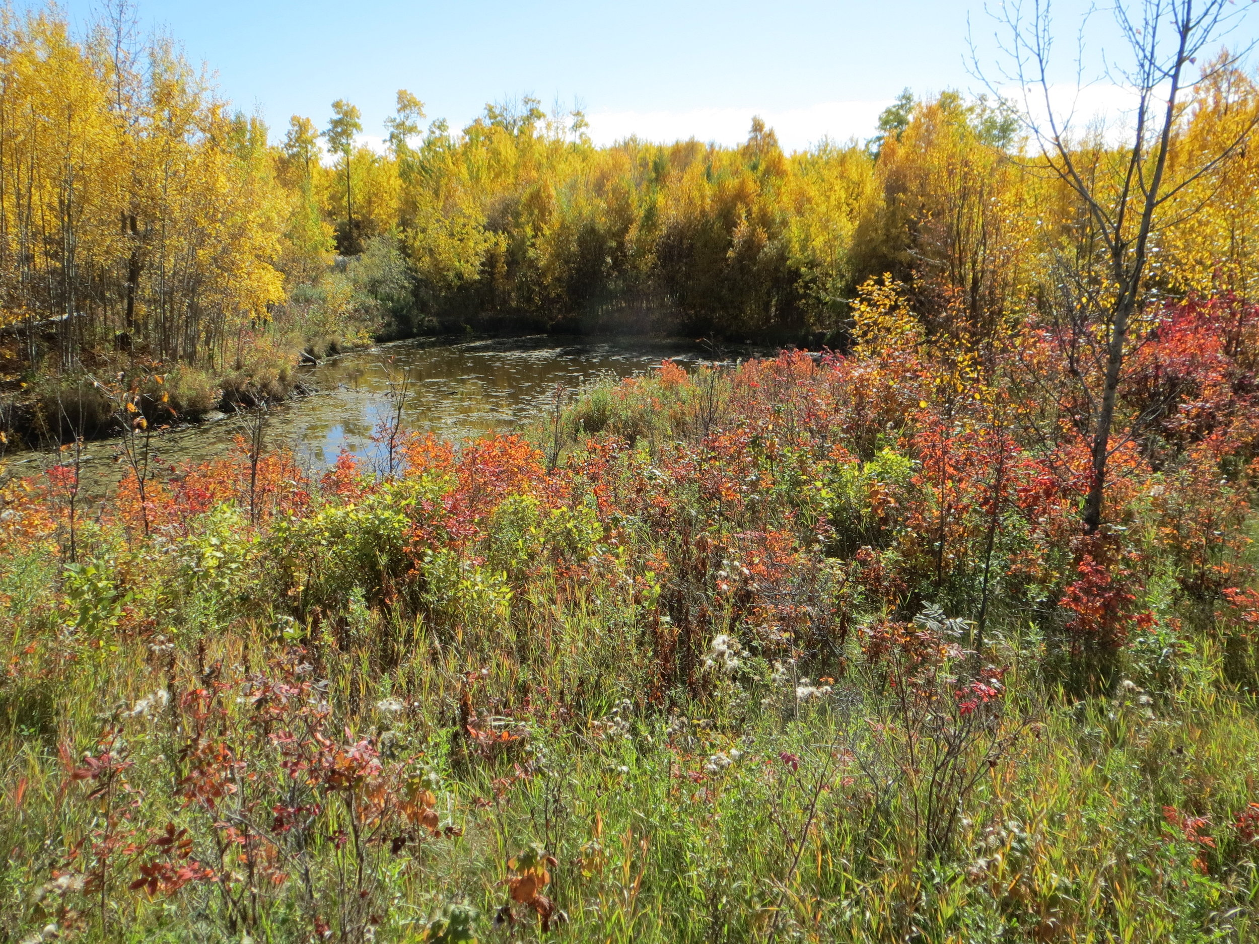 Hicks    Critical habitat in the heart of the Beaverhills Biosphere Reserve.   EXPLORE THIS LAND