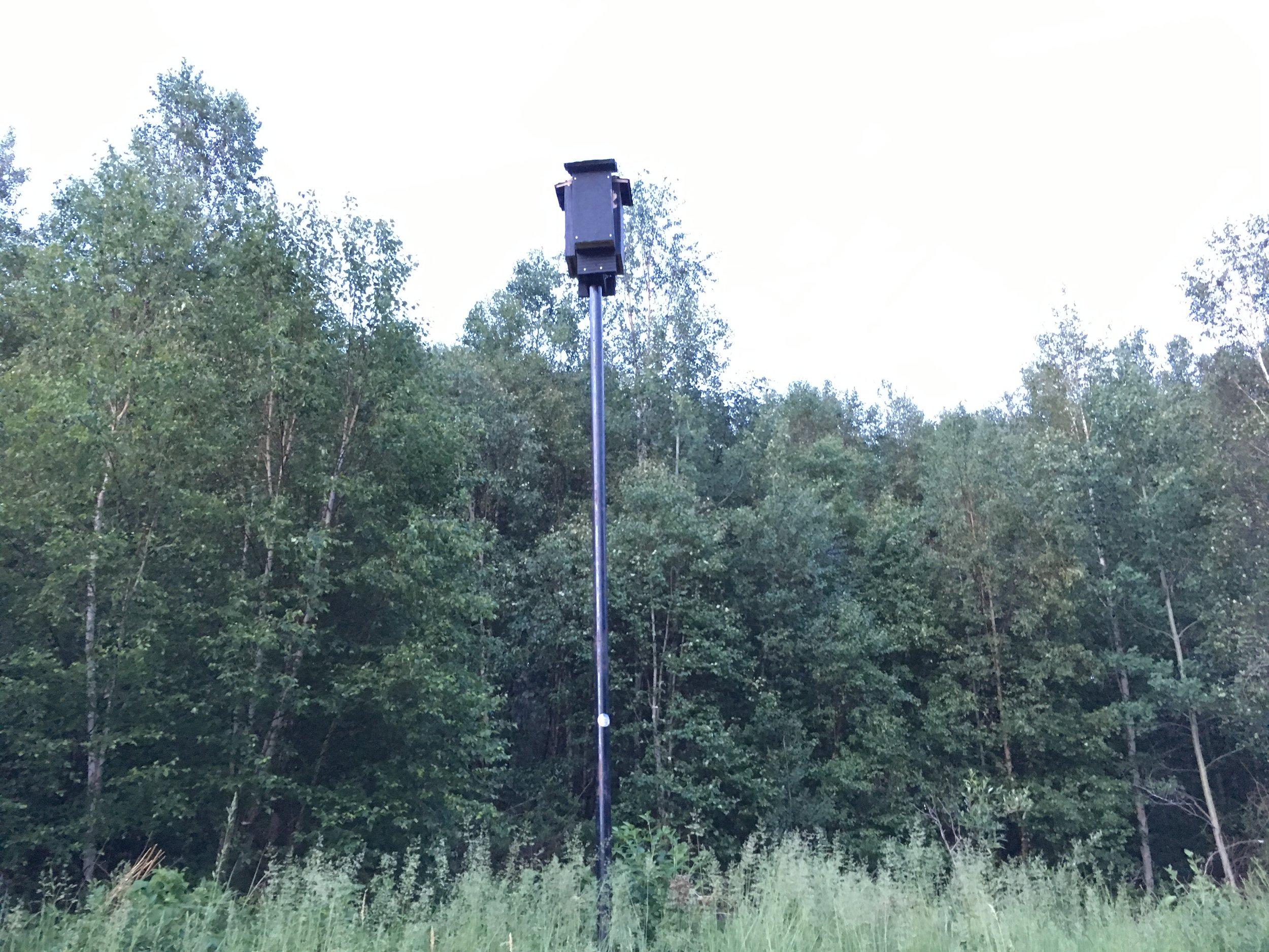 A bat box being surveyed at Glory Hills