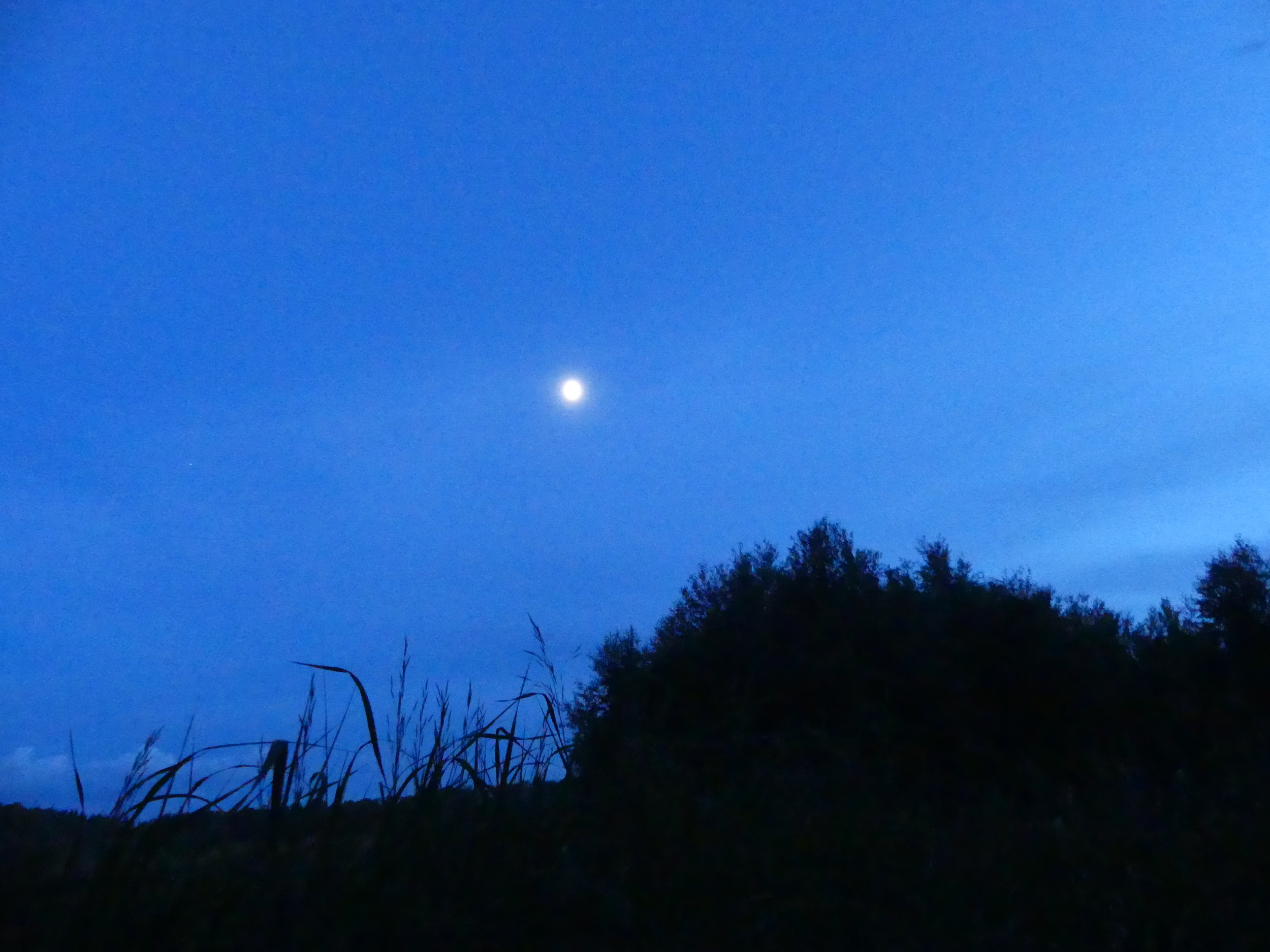 The moon at the Glory Hills Bat and Owl Survey