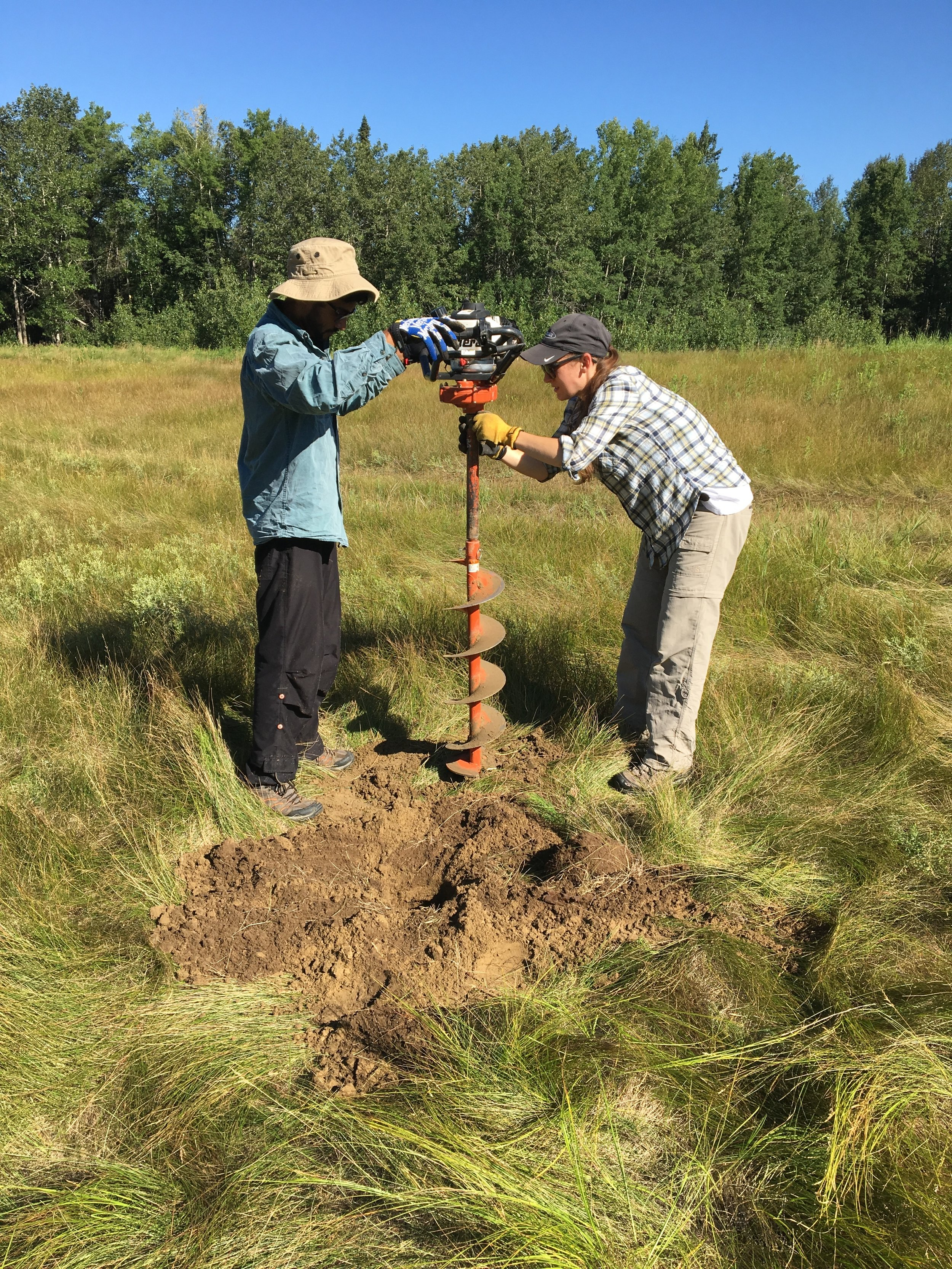 Volunteers drill a hole for a bat box post at Bunchberry Meadows
