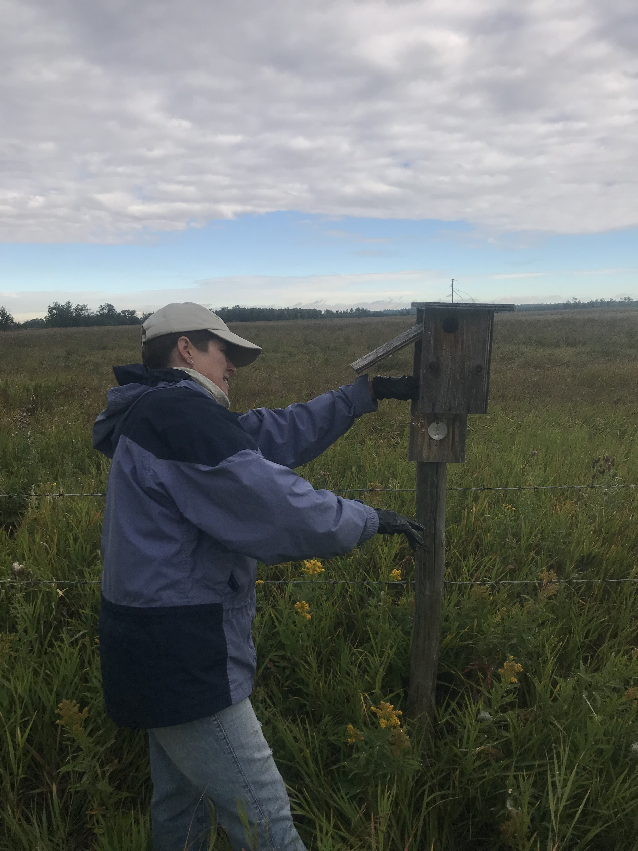 Volunteers cleaned out 53 nest boxes at Golden Ranches