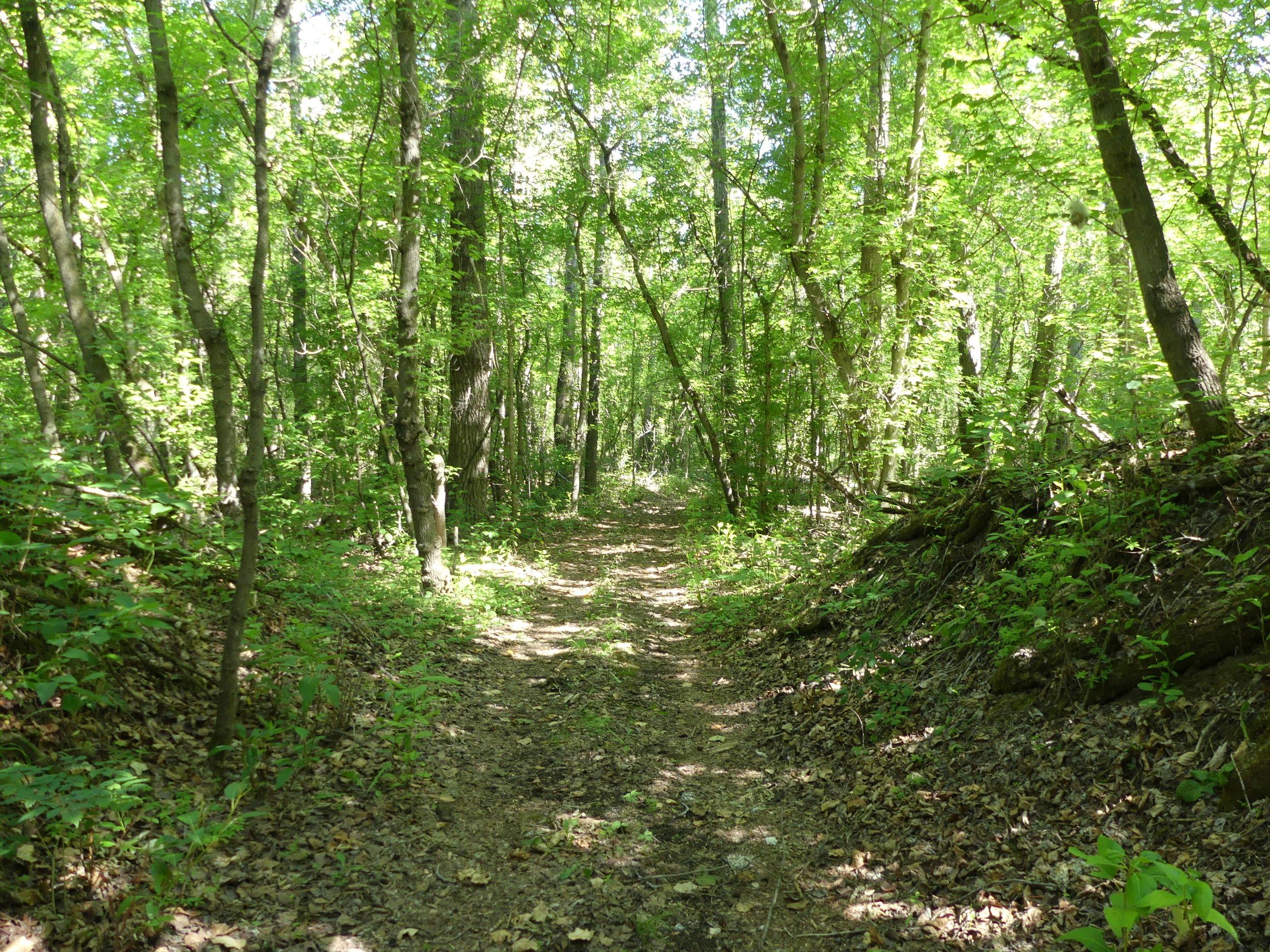 Trail at Visser - EALT.JPG