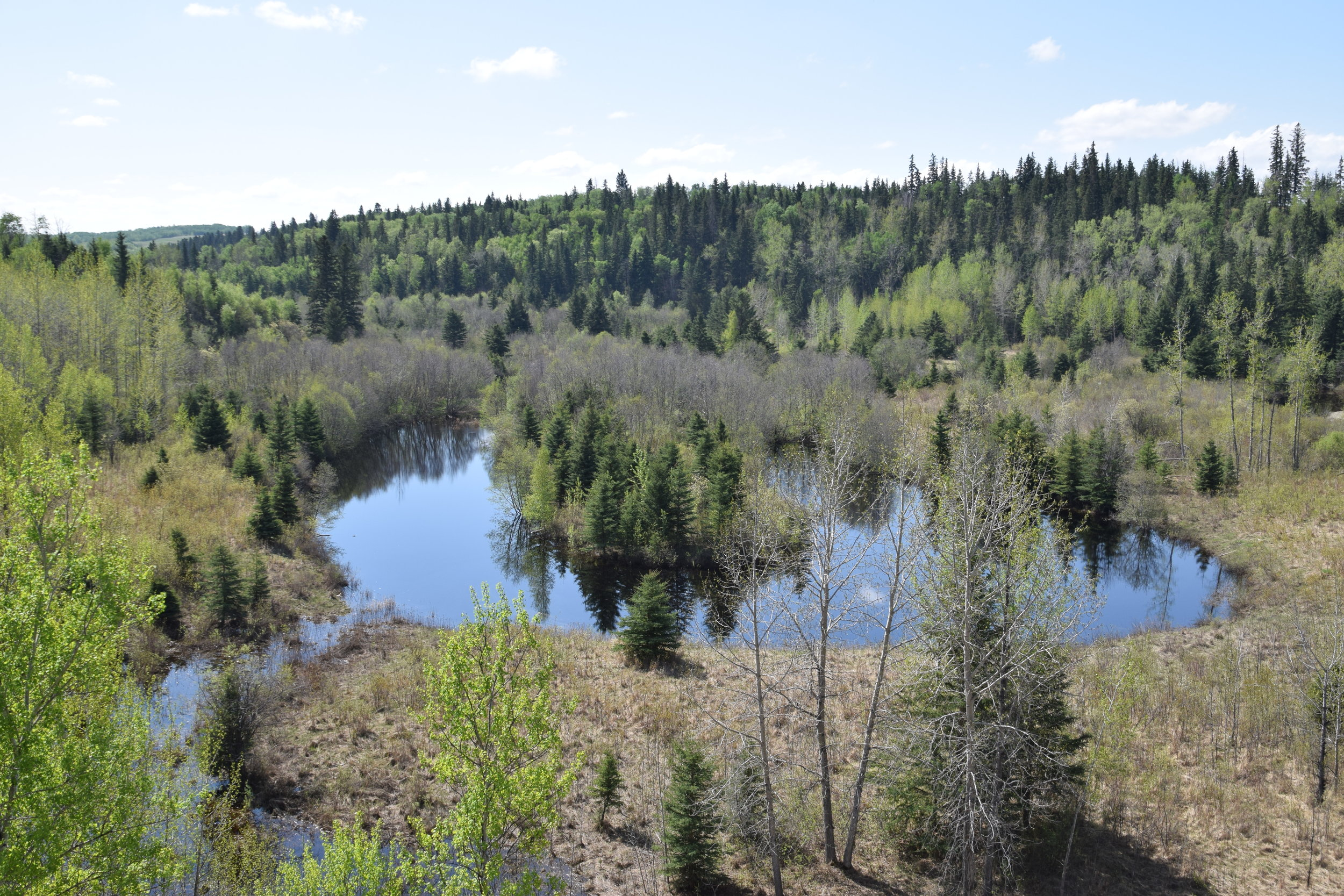 The Edmonton Area Land Trust has had issues with off-highway vehicles trespassing on Pipestone Creek Conservation Lands.