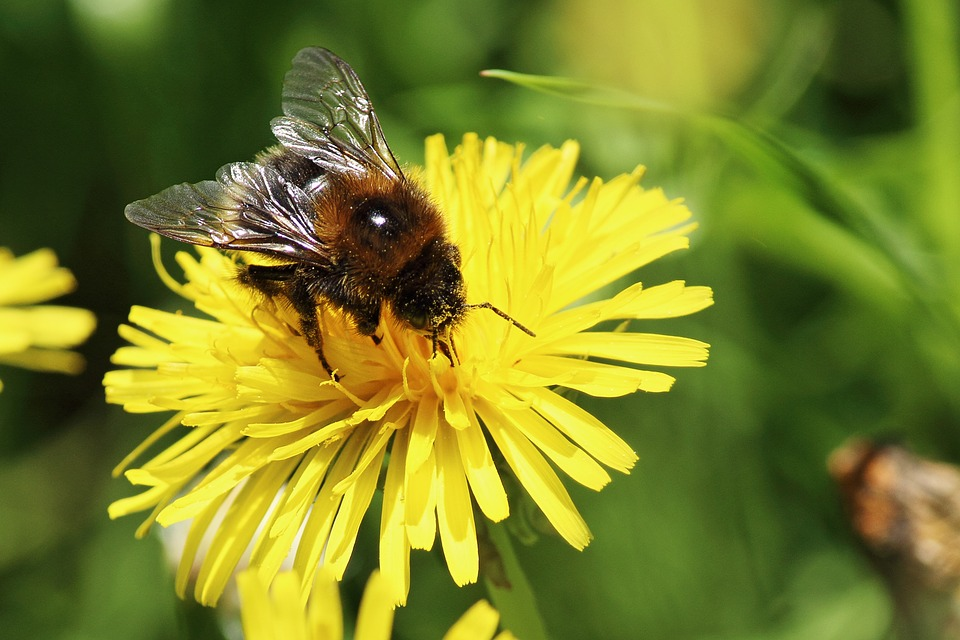 Conservationists want as many Edmontonians as possible to build bee hotels.