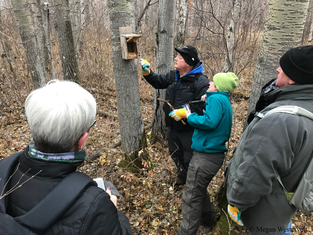 Meghan Jacklin, Stewardship Coordinator at EALT, works with volunteers to assess if any creatures have been living in the nest boxes, which have been found to be inhabited by flying squirrels rather than birds this time of year.
