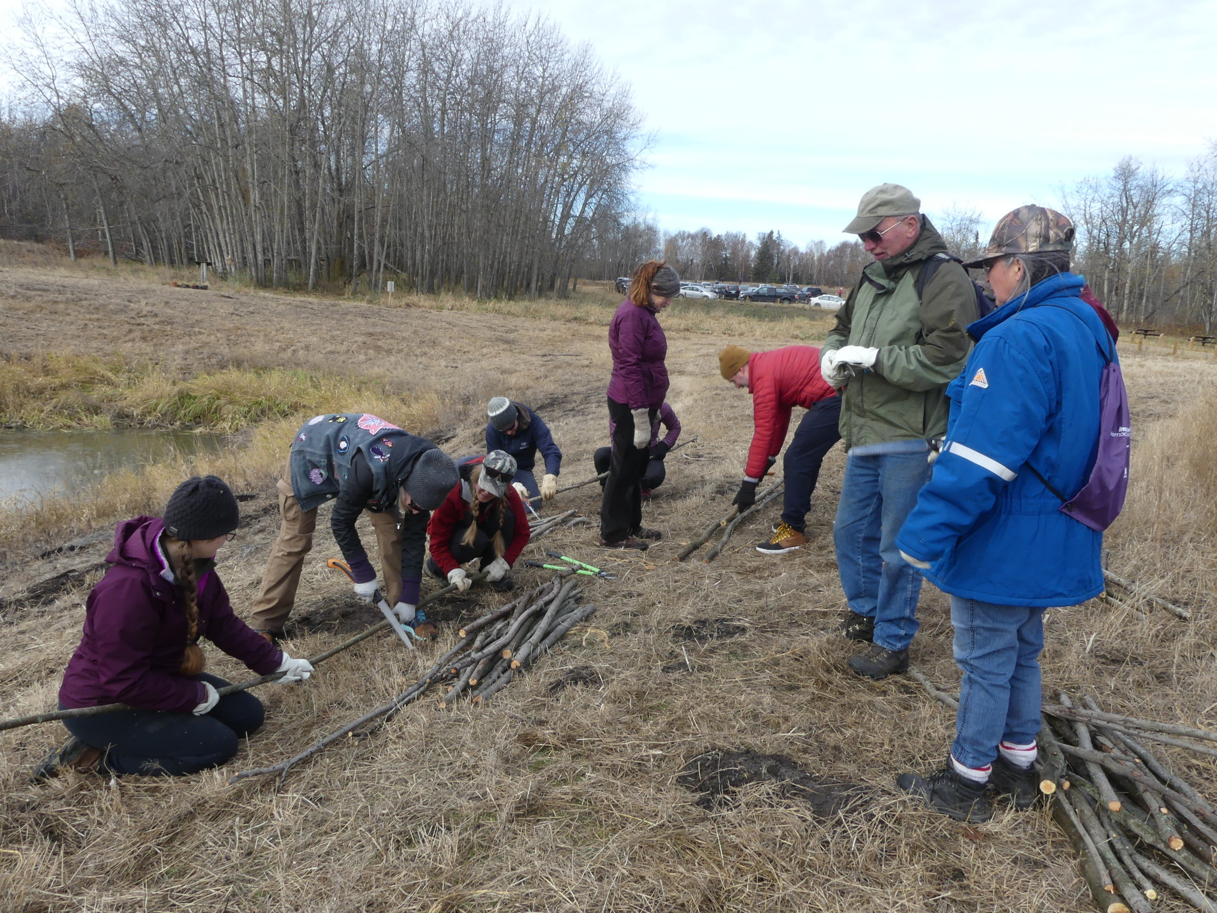 Live Willow stakes being planted at Bunchberry Meadows