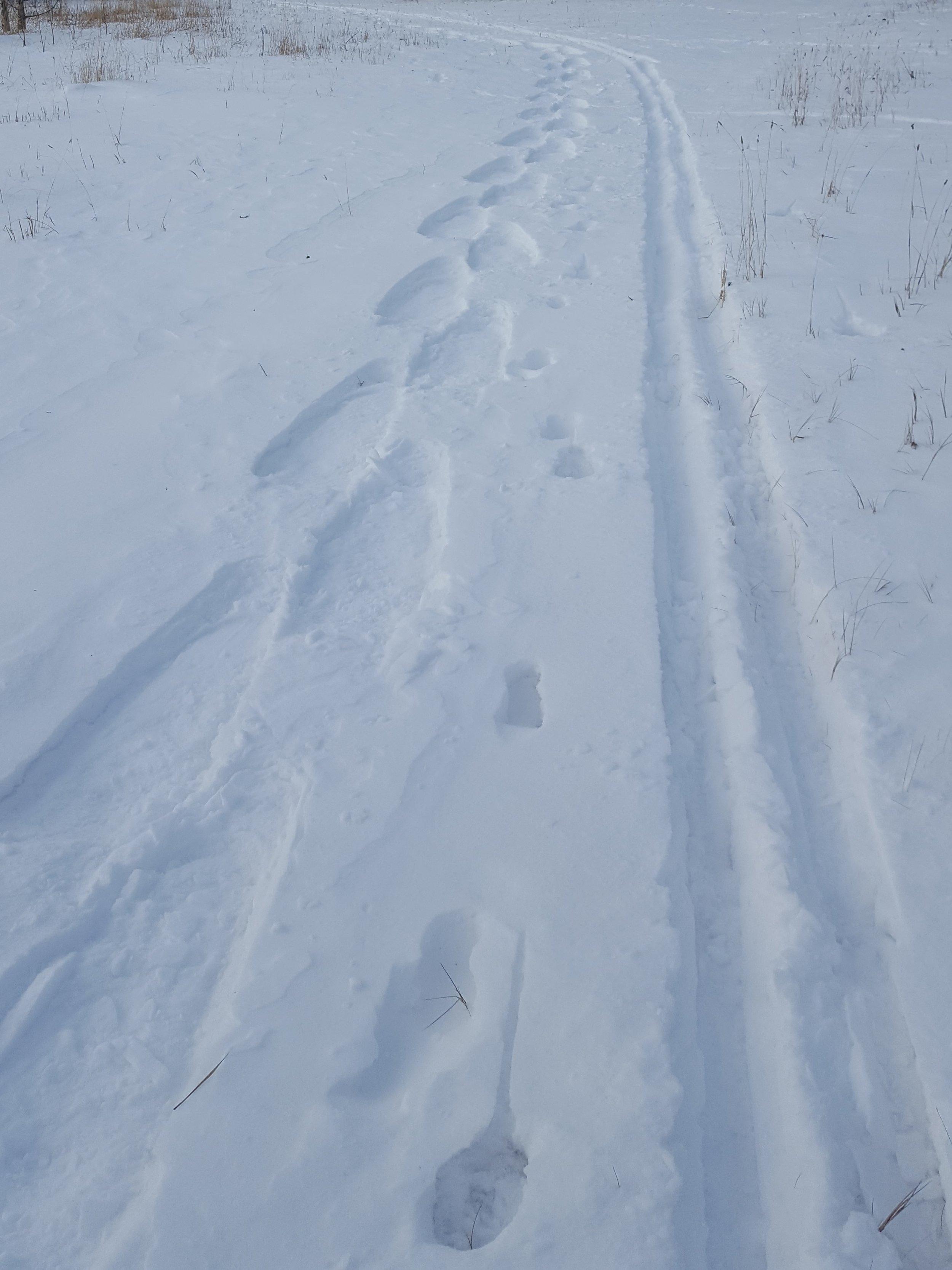 boisvert tracks (2).jpg