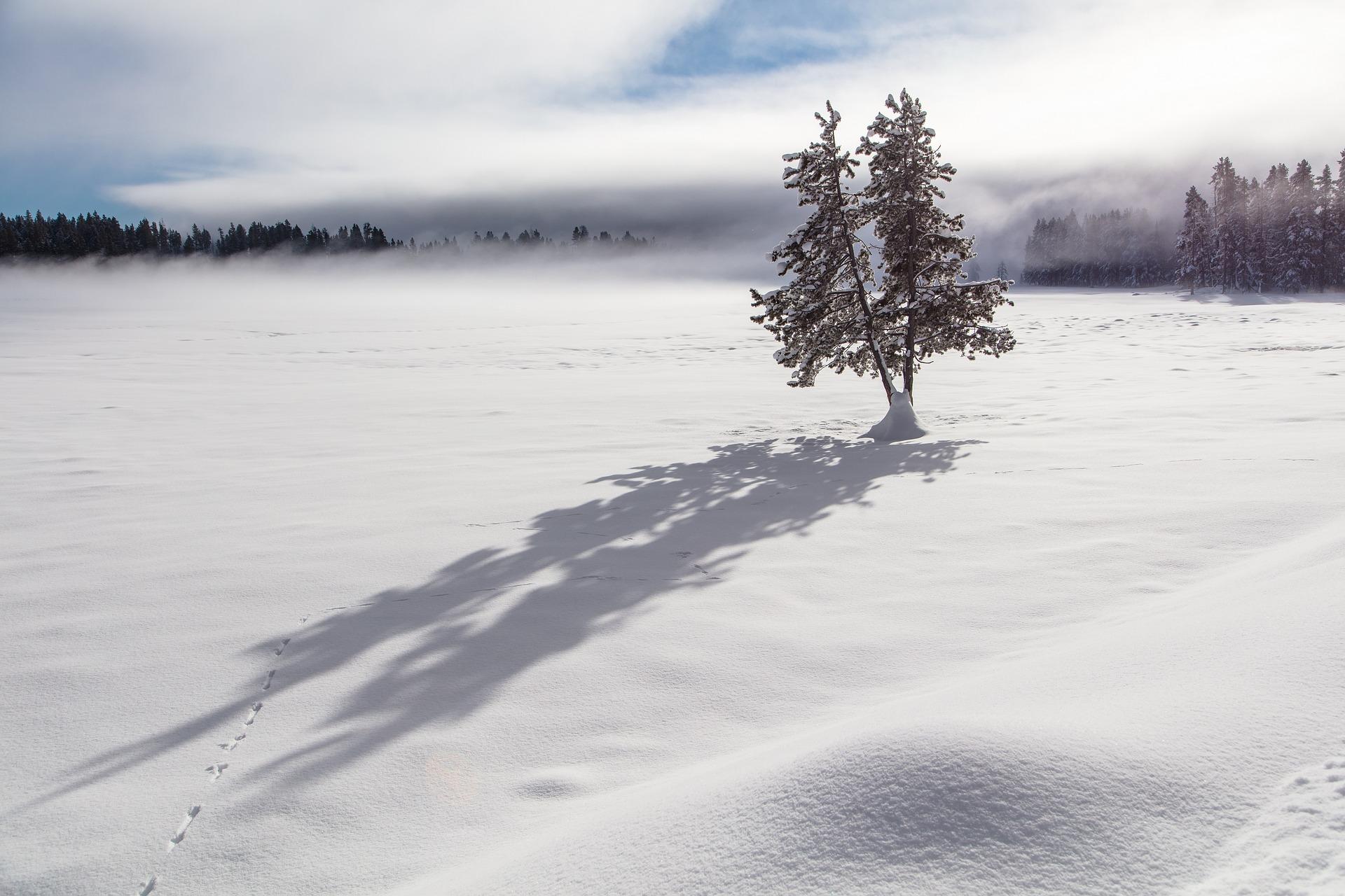 tree-shadows.jpg
