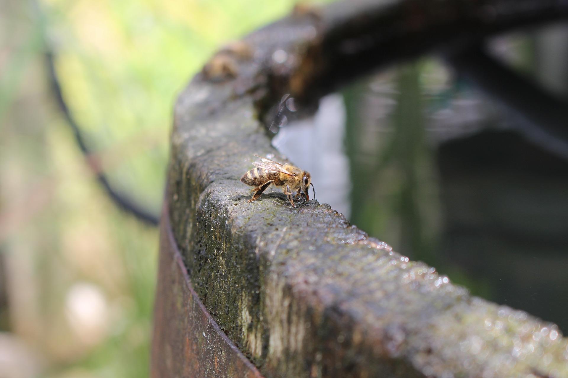 bees-2532952_1920.jpg