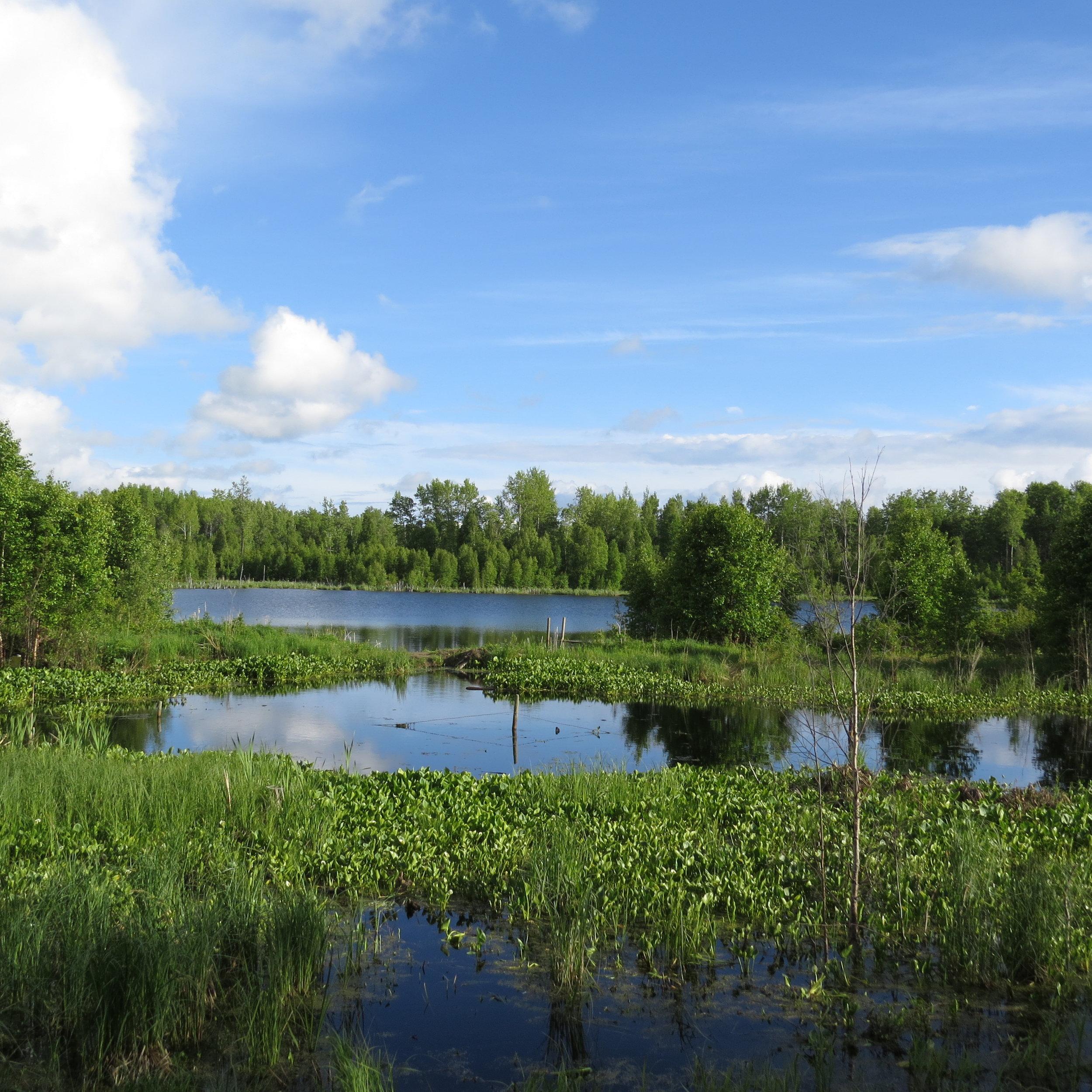 Carbyn wetland - EALT.JPG