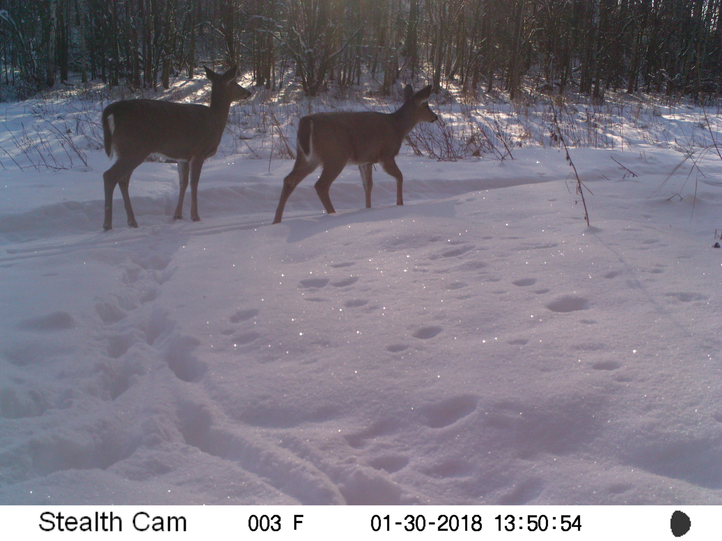 Deer at Glory Hills