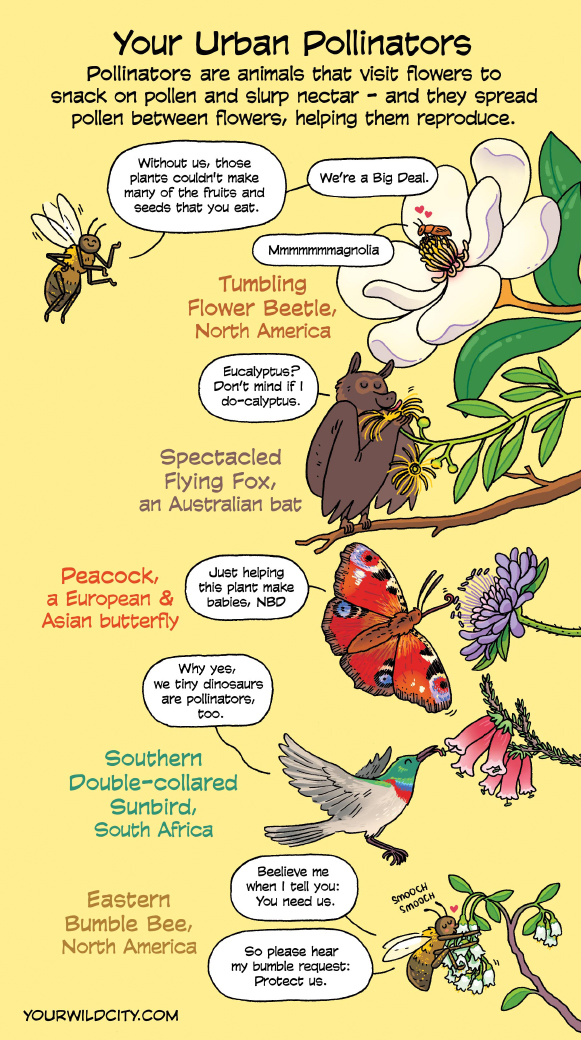 Image from Your Wild City comics at www.yourwildcity.com/comic/urban-pollinators