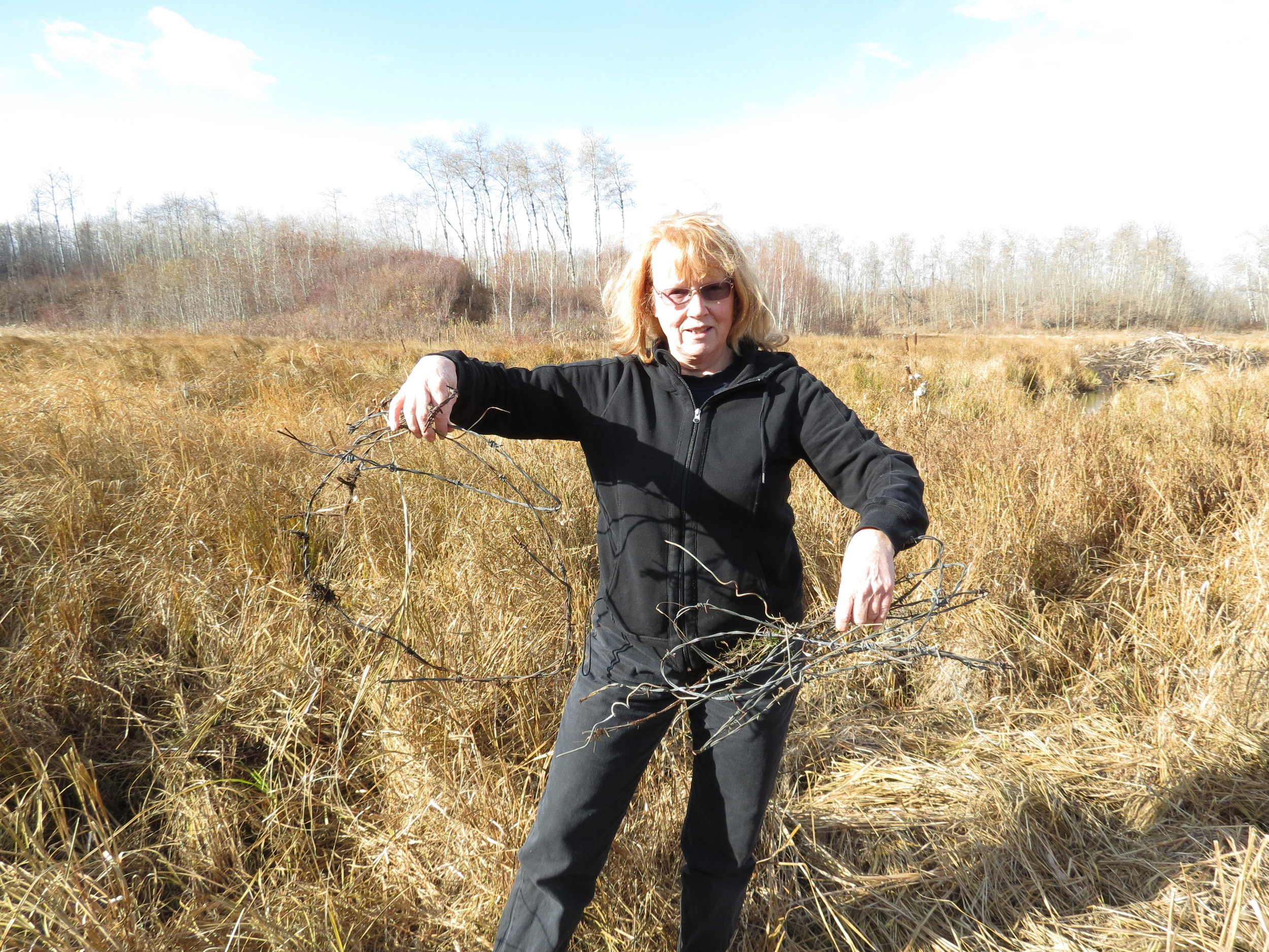 Pam removing old barbed wire at Ministik Conservation Lands