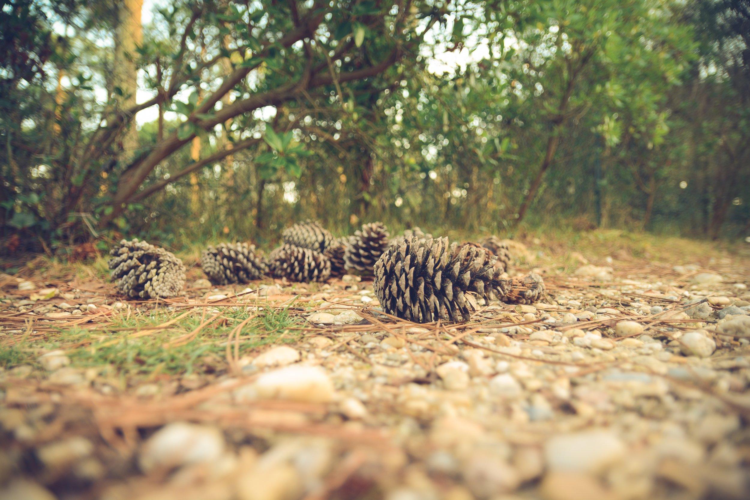 chris-lawton-pinecone floor-unsplash.jpg