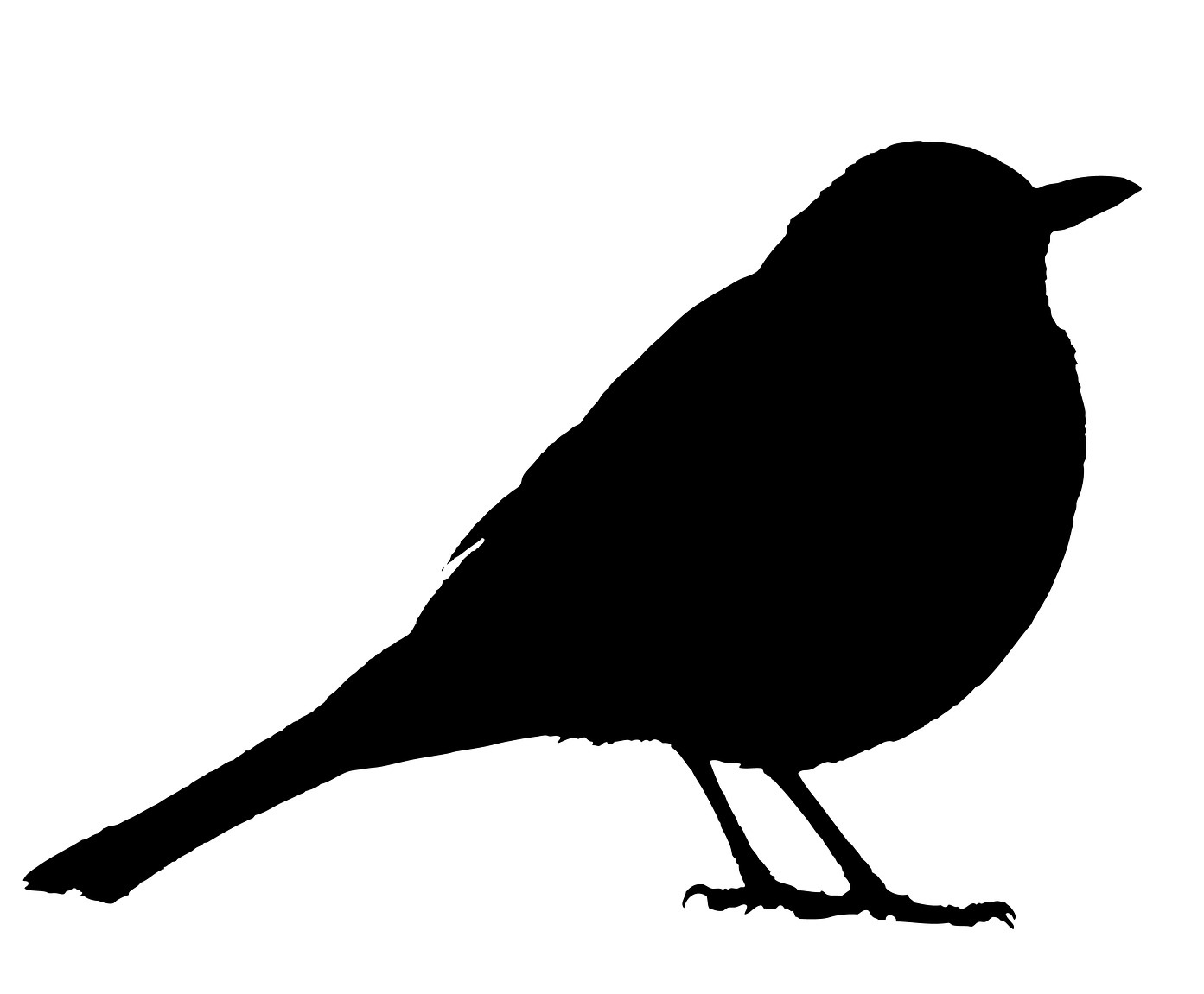 blackbird-2774513_1920.jpg