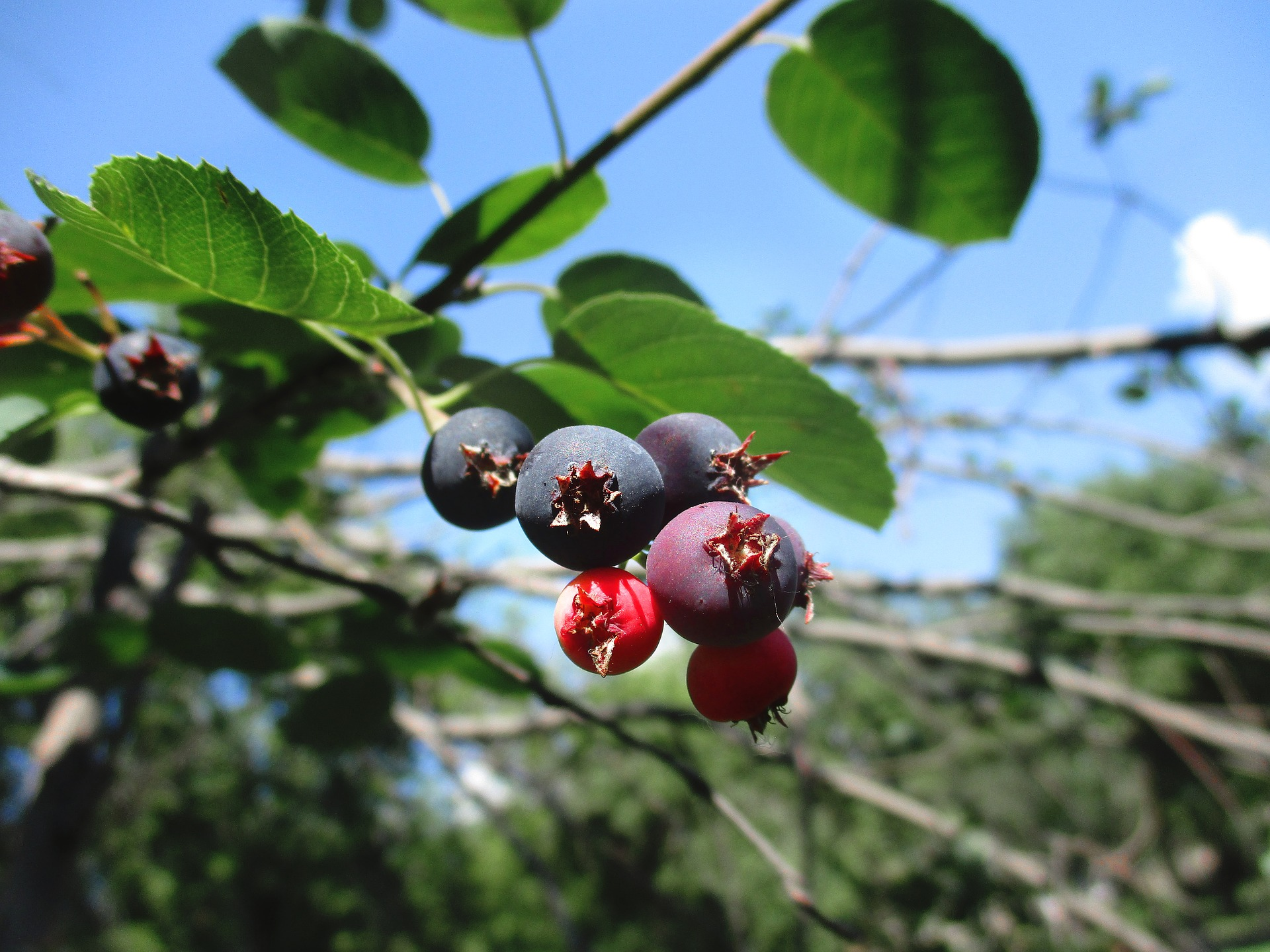 berry-3569694_1920.jpg