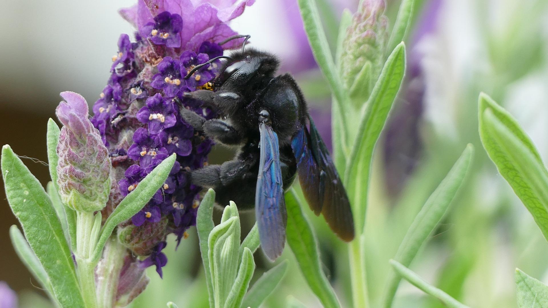 lavender-4258420_1920.jpg