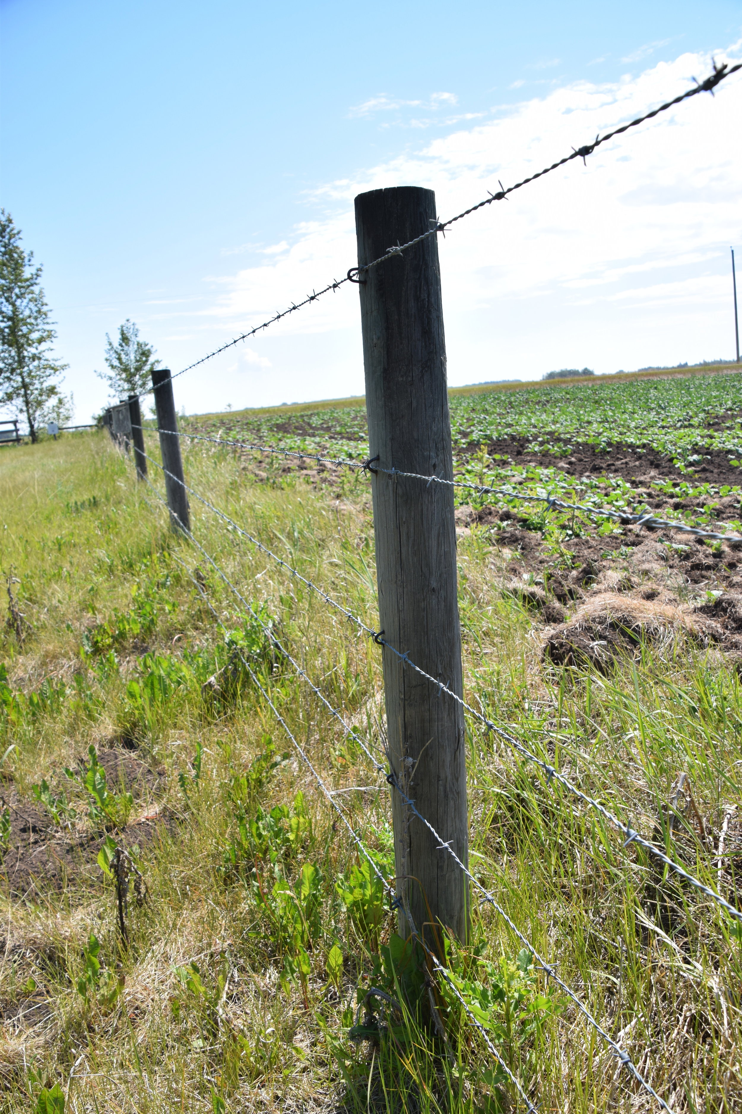 This five-strand barbed wire fence poses a hazard to wildlife.