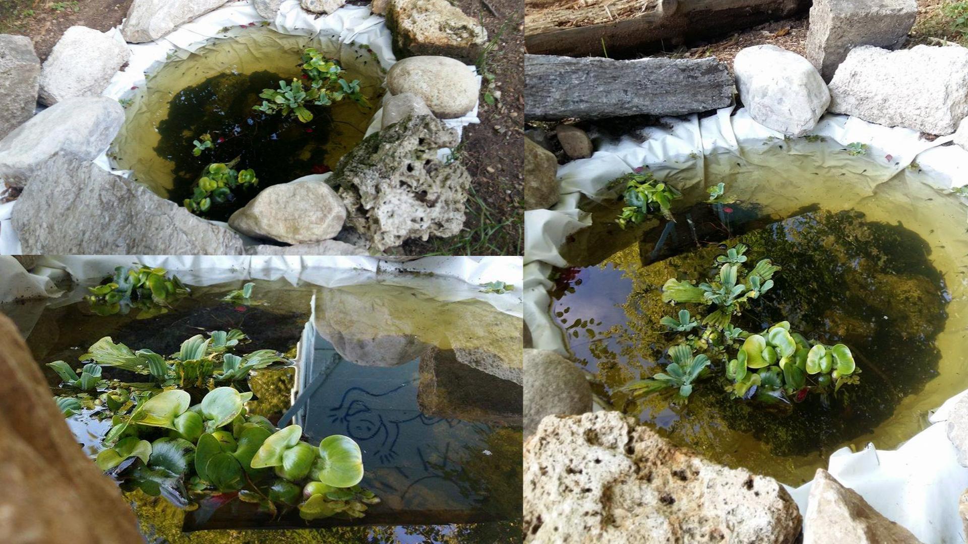 Unser ganzer Stolz... unser, ca. 80 cm Durchmesser, selbst angelegter Teich & Wohnort unserer 501 Kaulquappen - Teil von Miniland. Und unser Logo, welches wir an die Häuschenwand gesprüht hatten, spiegelt sich so schön im Wasser ;)