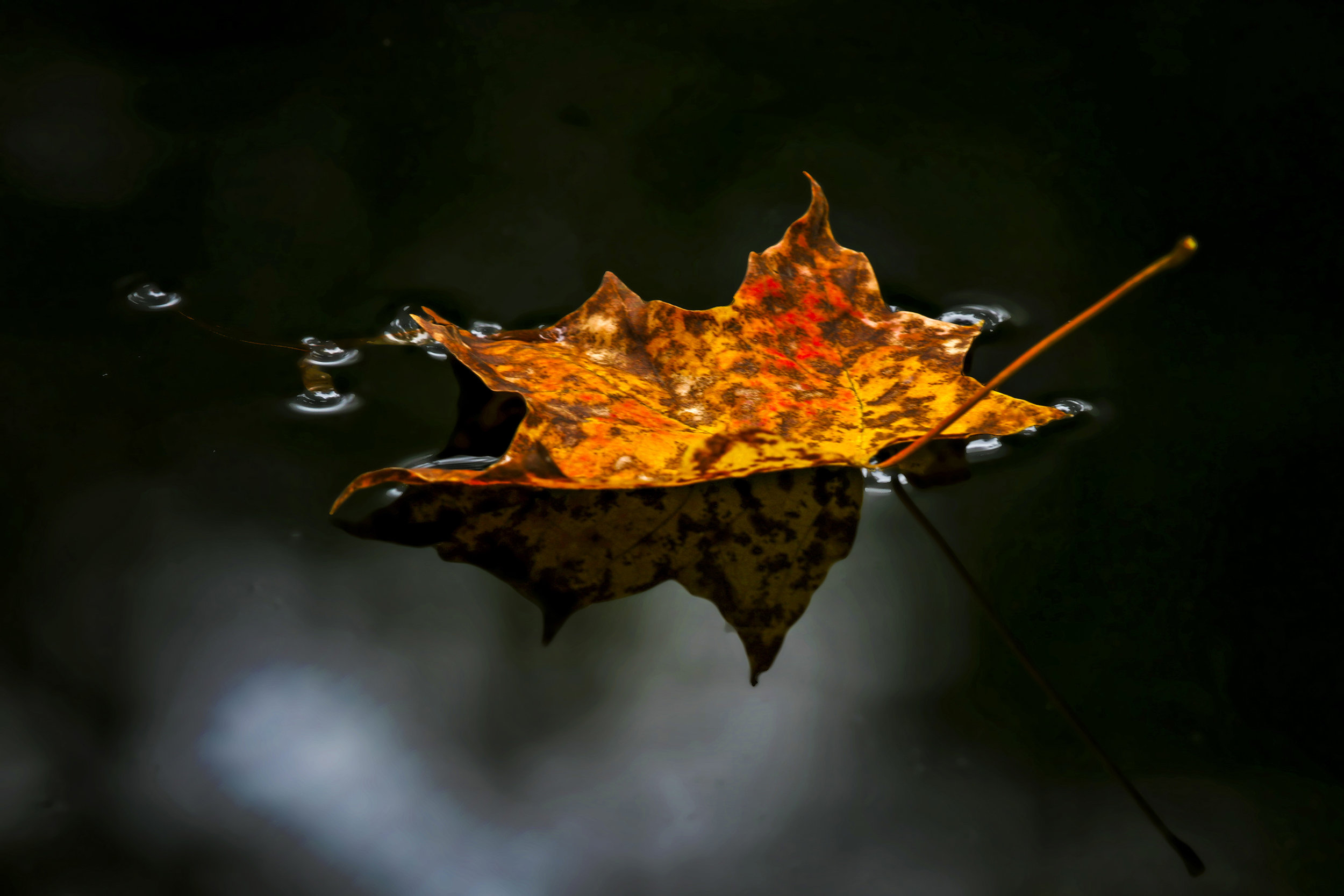 Fall Leaf Reflection at Findley State Park, Wellington, OH - Photo by Todd Sechel