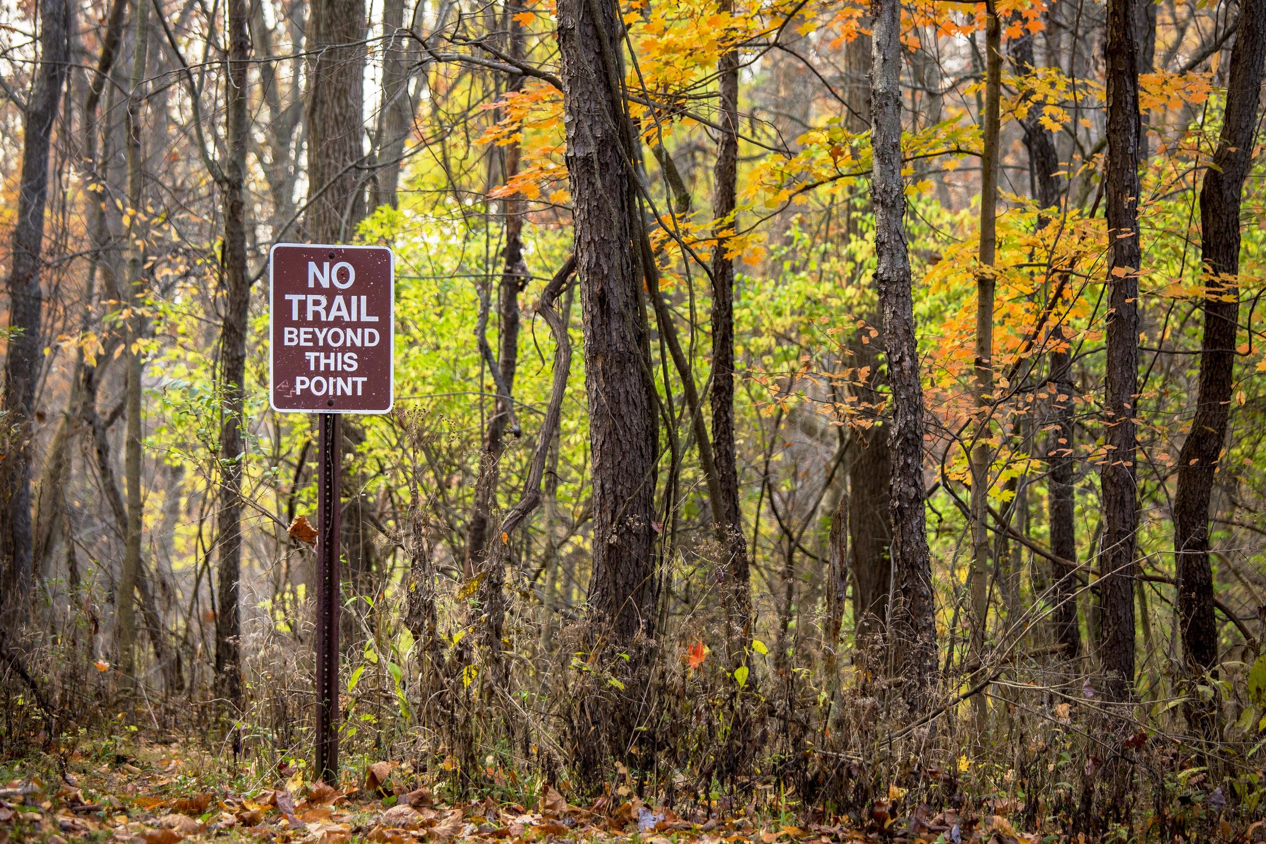 Lake Isaac Trail, Berea, Ohio - Photo by Todd Sechel