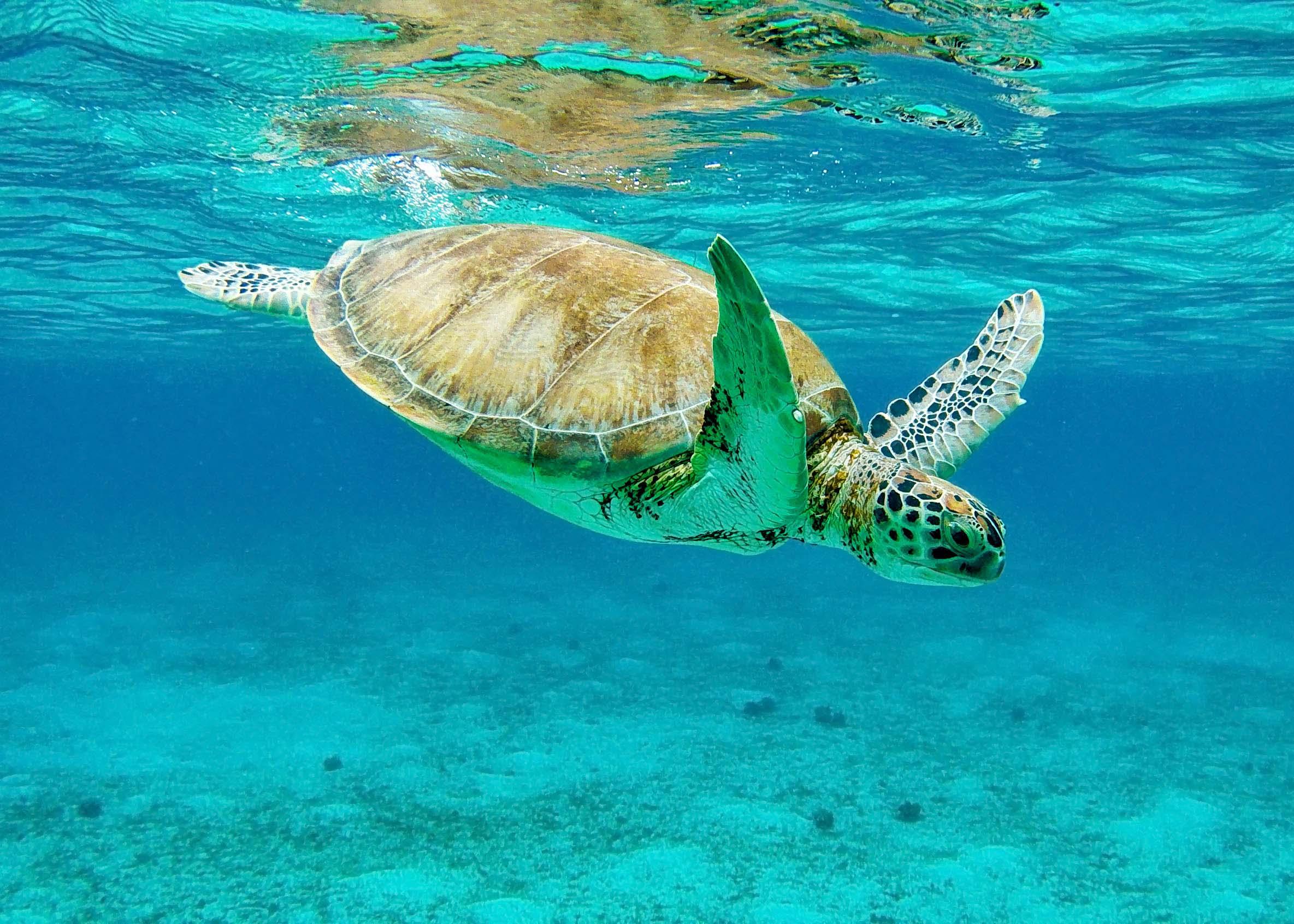 Todd Sechel Tobago Cays Gopro 2115 Social.jpg