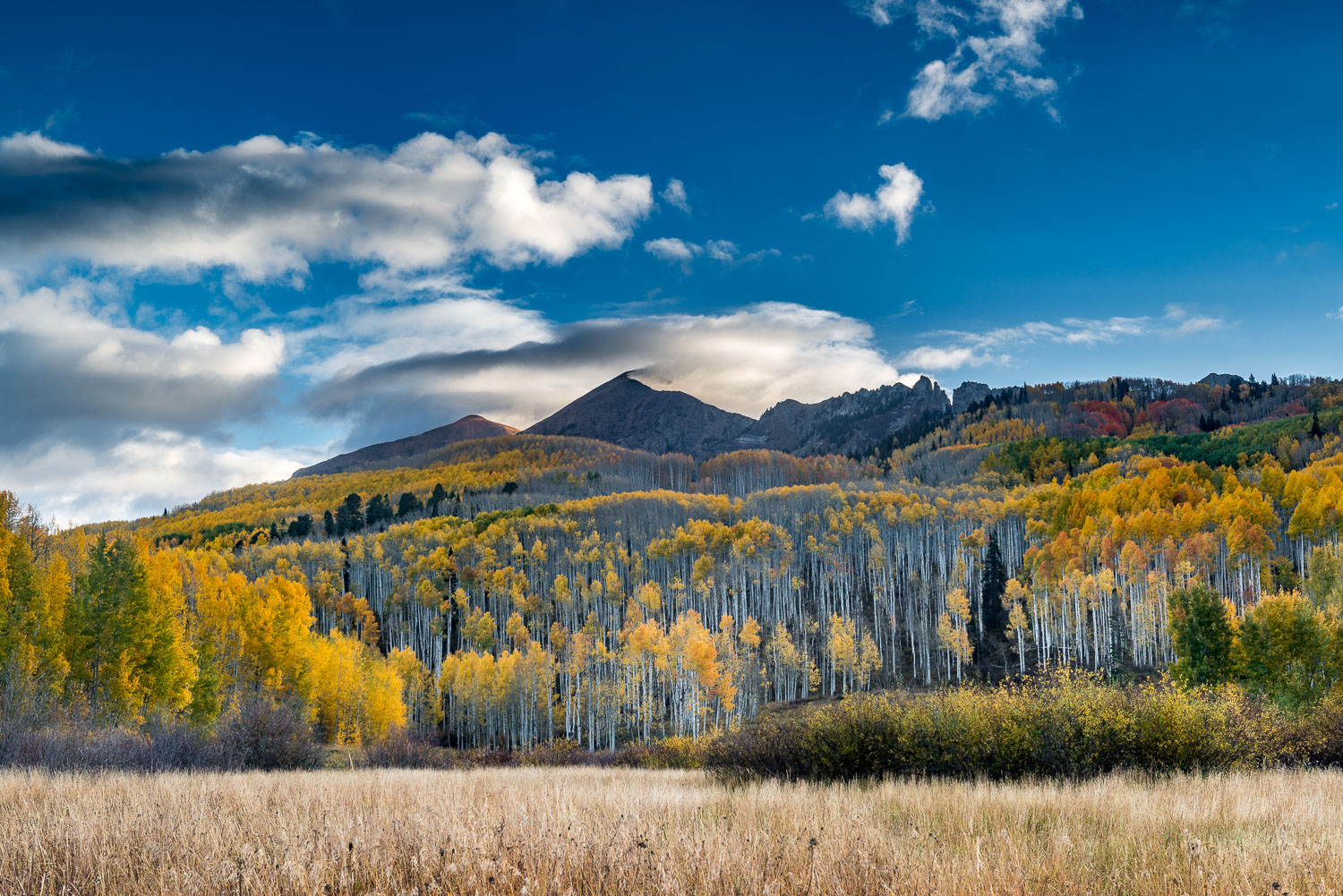 """Fall Aspens  Rising above Alpine Meadow"", near Crested Butte, C"
