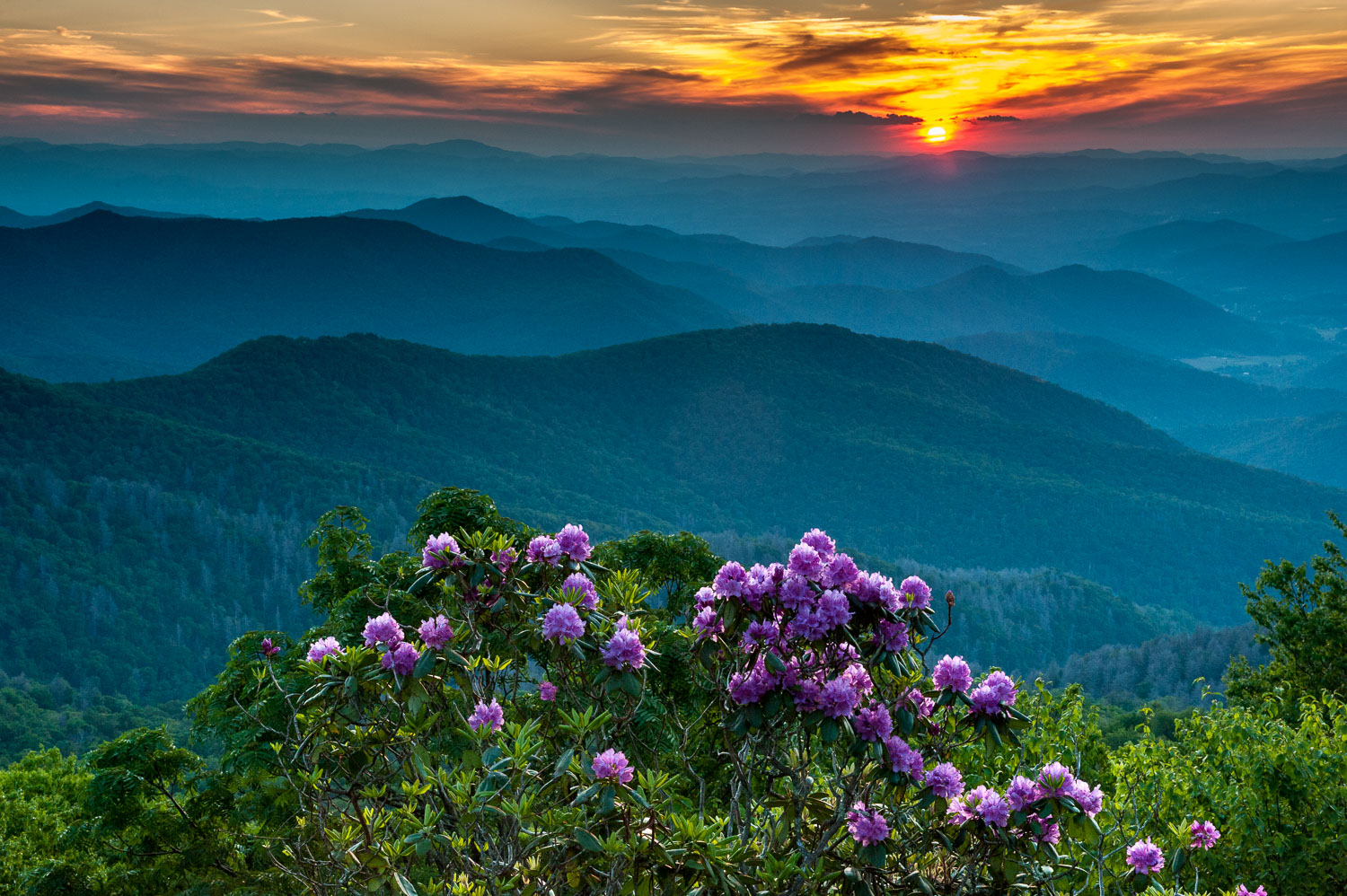 """Rhododendron Sunset"", Blue Ridge Parkway, North Carolina"