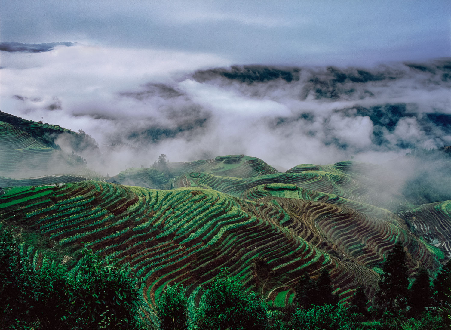 """Terraced Verde"" Dragon's Backbone Rice Terraces, Guangxi, China"