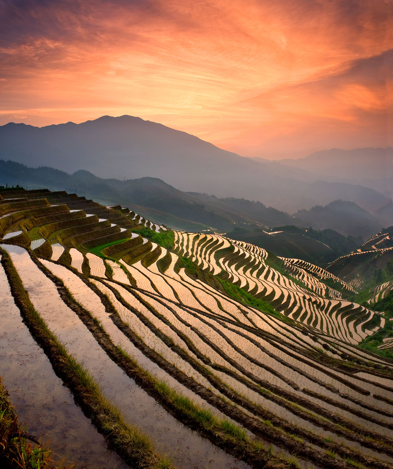"""Reptilian Sunrise"", Dragon's Backbone( Longji) Rice Terrace nea"