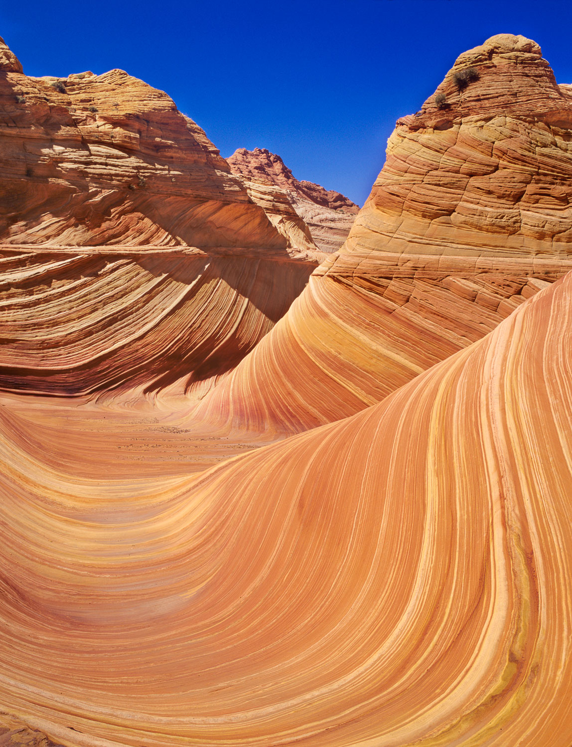 """The Wave"", Swirling Navaho Sandstone, Vermillion Cliffs area ne"